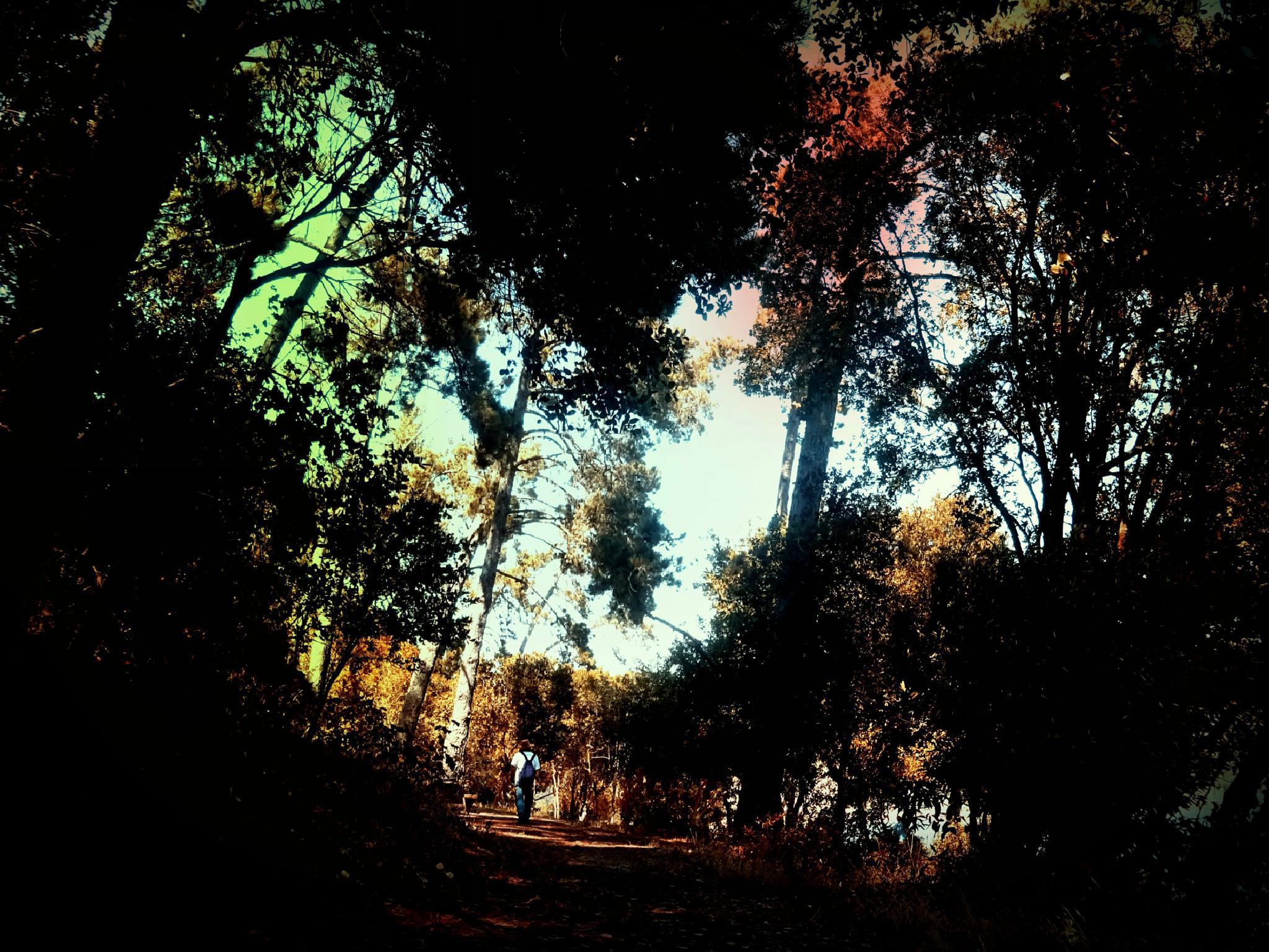 In the woods by gudrun.jones