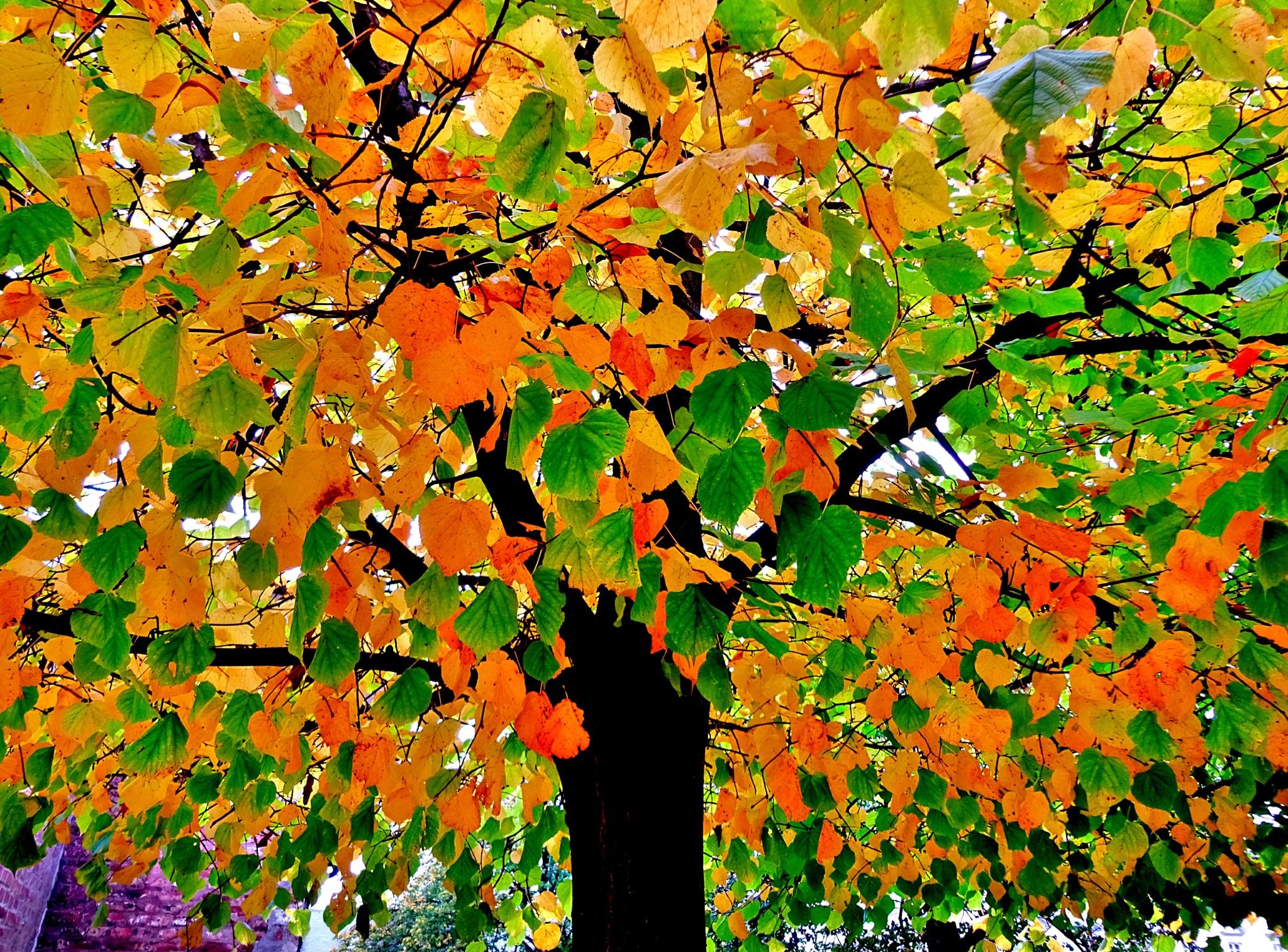 The vivid colors of Fall by gudrun.jones