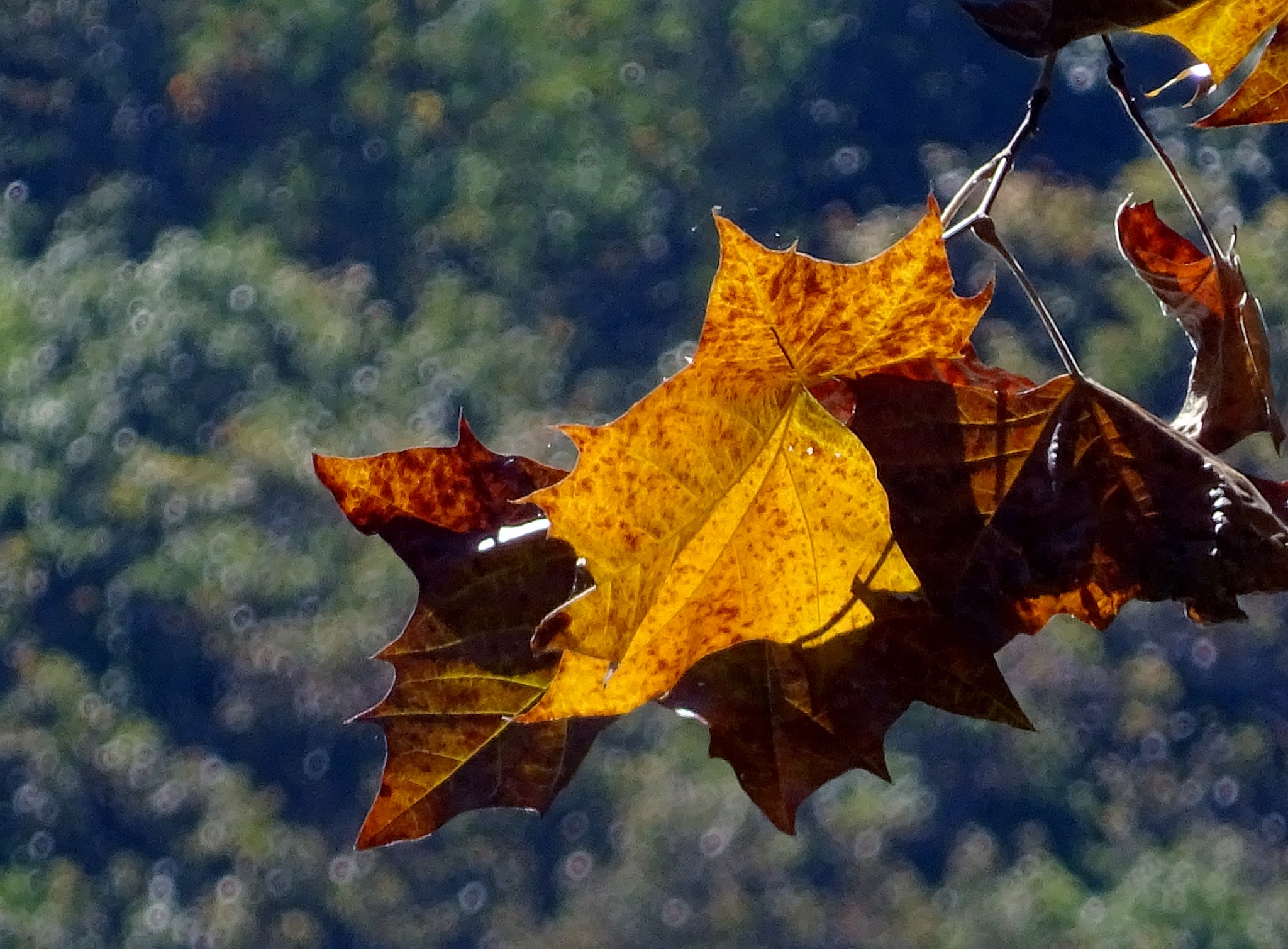 Fall is in the air by gudrun.jones