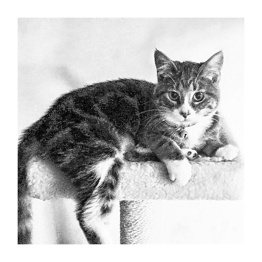 Tabby Kitten by florence.bresnahan