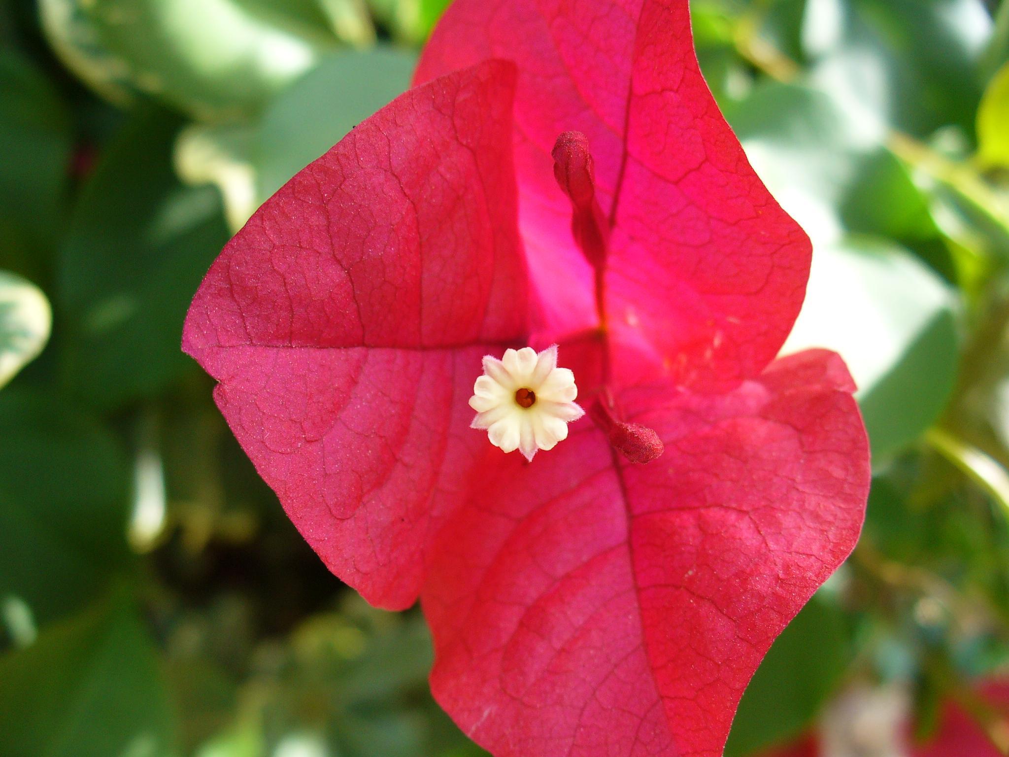 Flower in a flower by Jonathan Binisti
