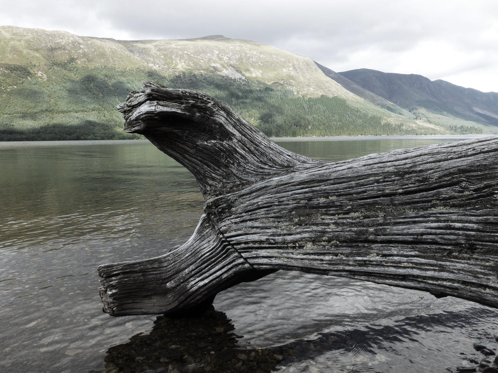 Photo in Nature #log #loch