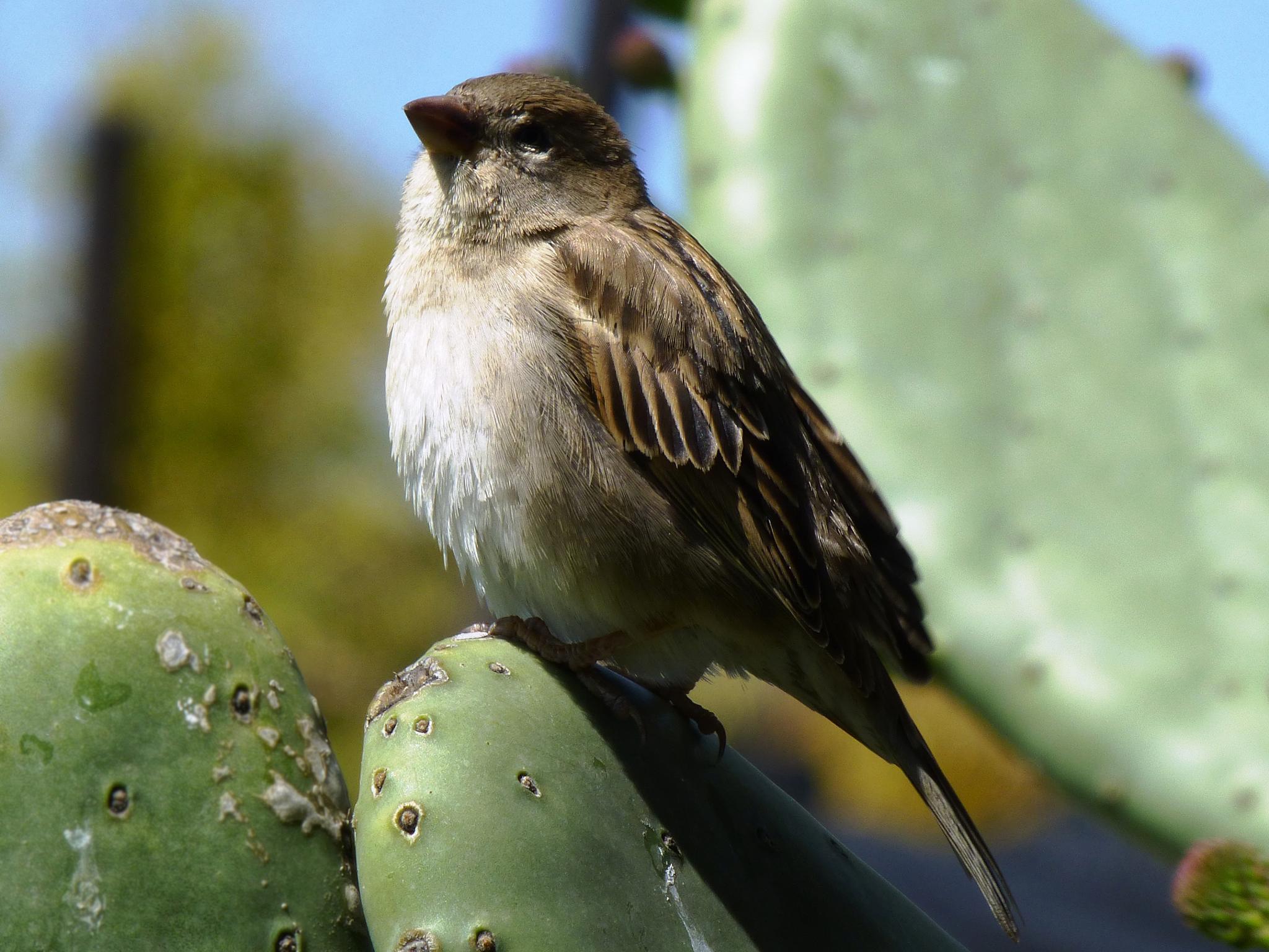 Sparrow  by Warren