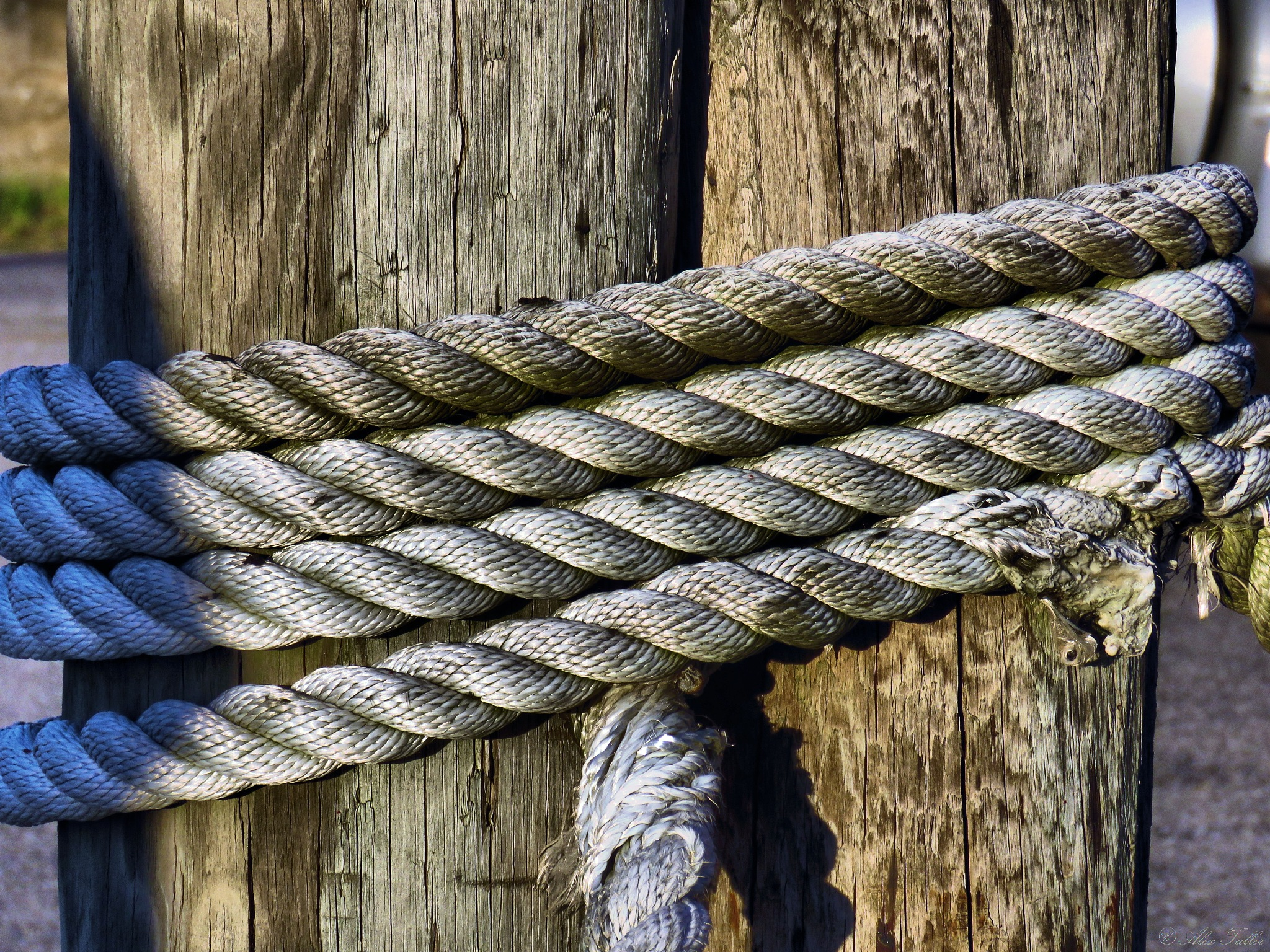 Ropes II by +Alex Taller