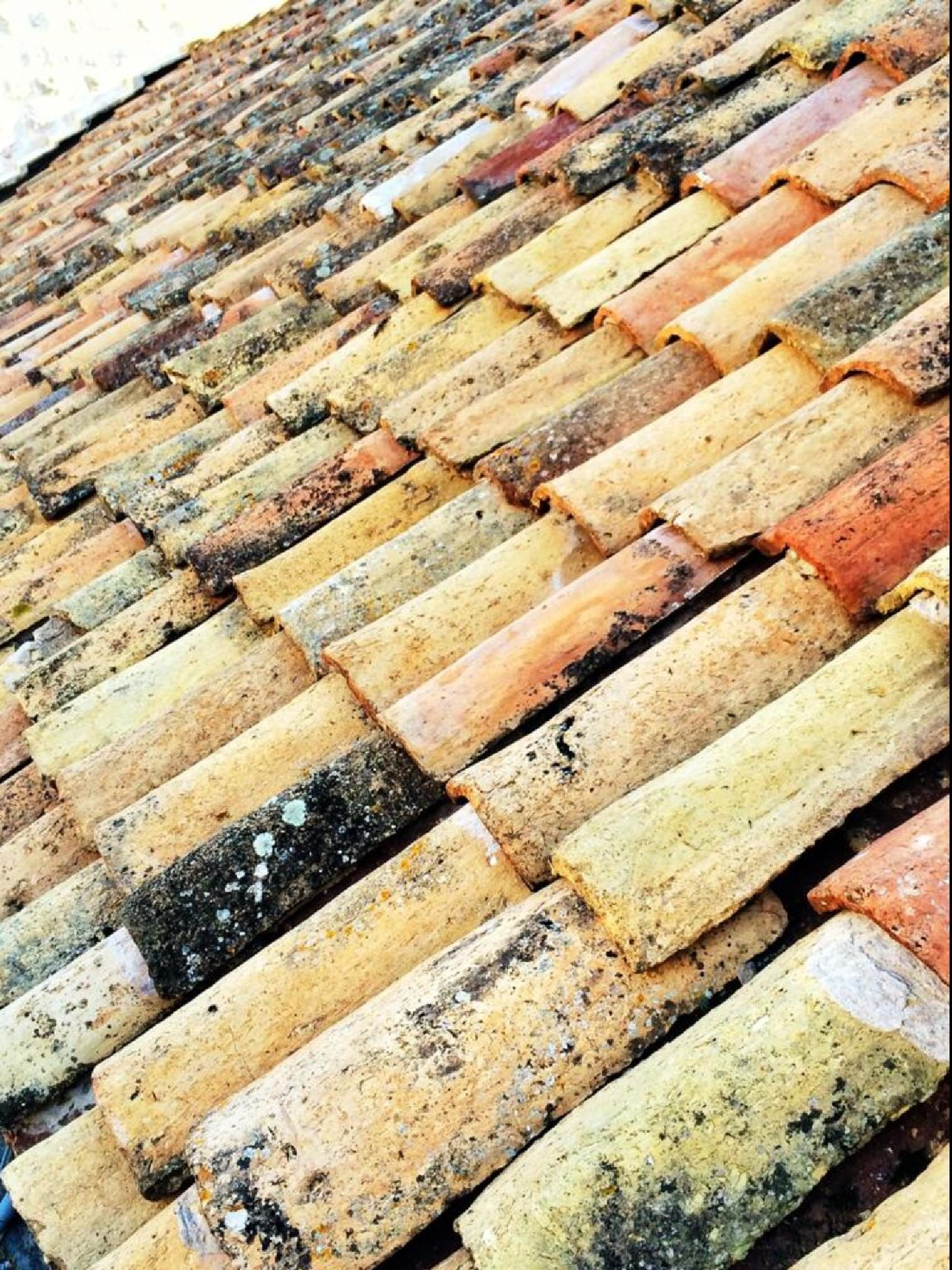 Roof tiles by Gayle