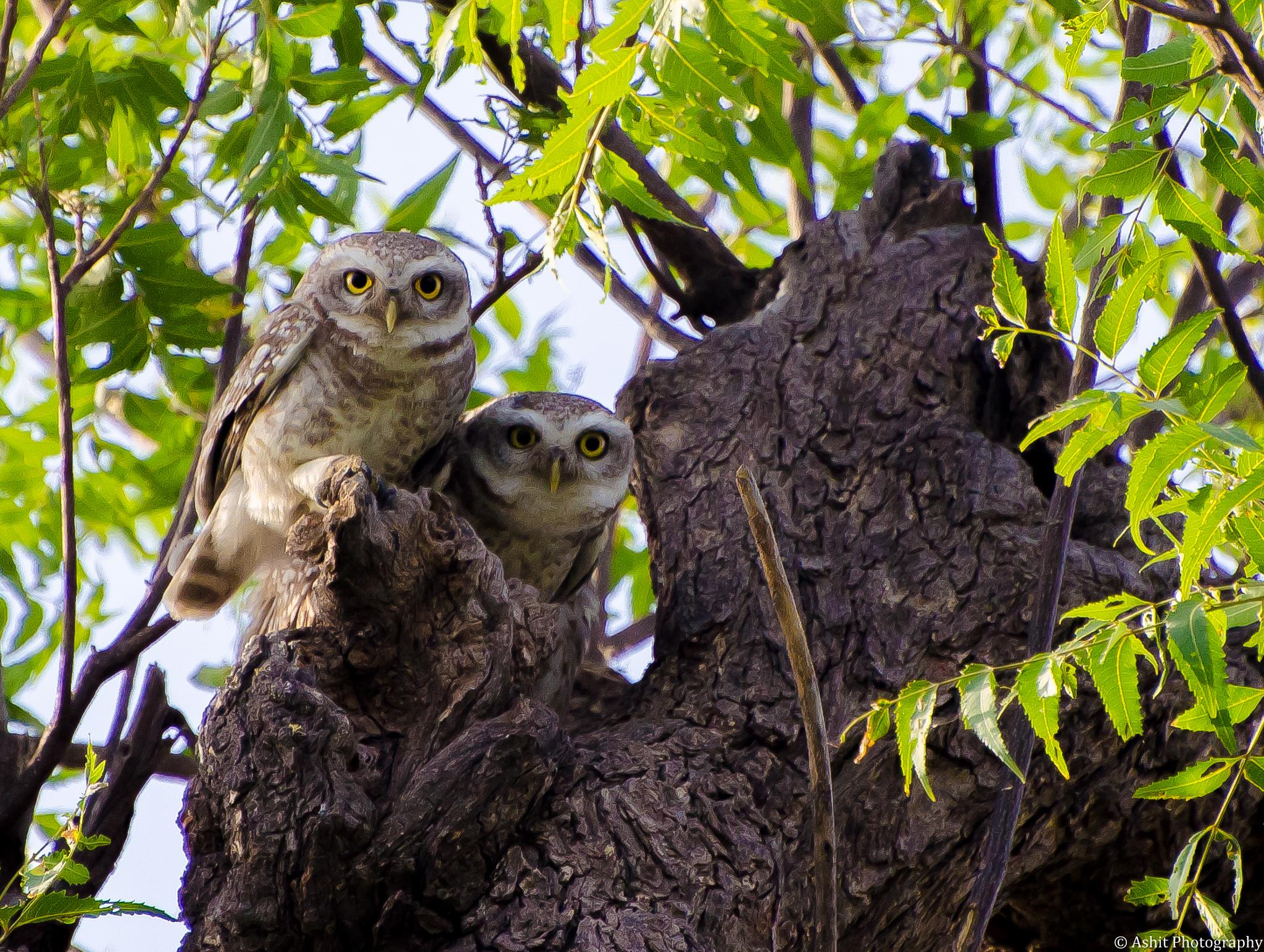 Brother together :P (White Owls) by Ashit Choudhary