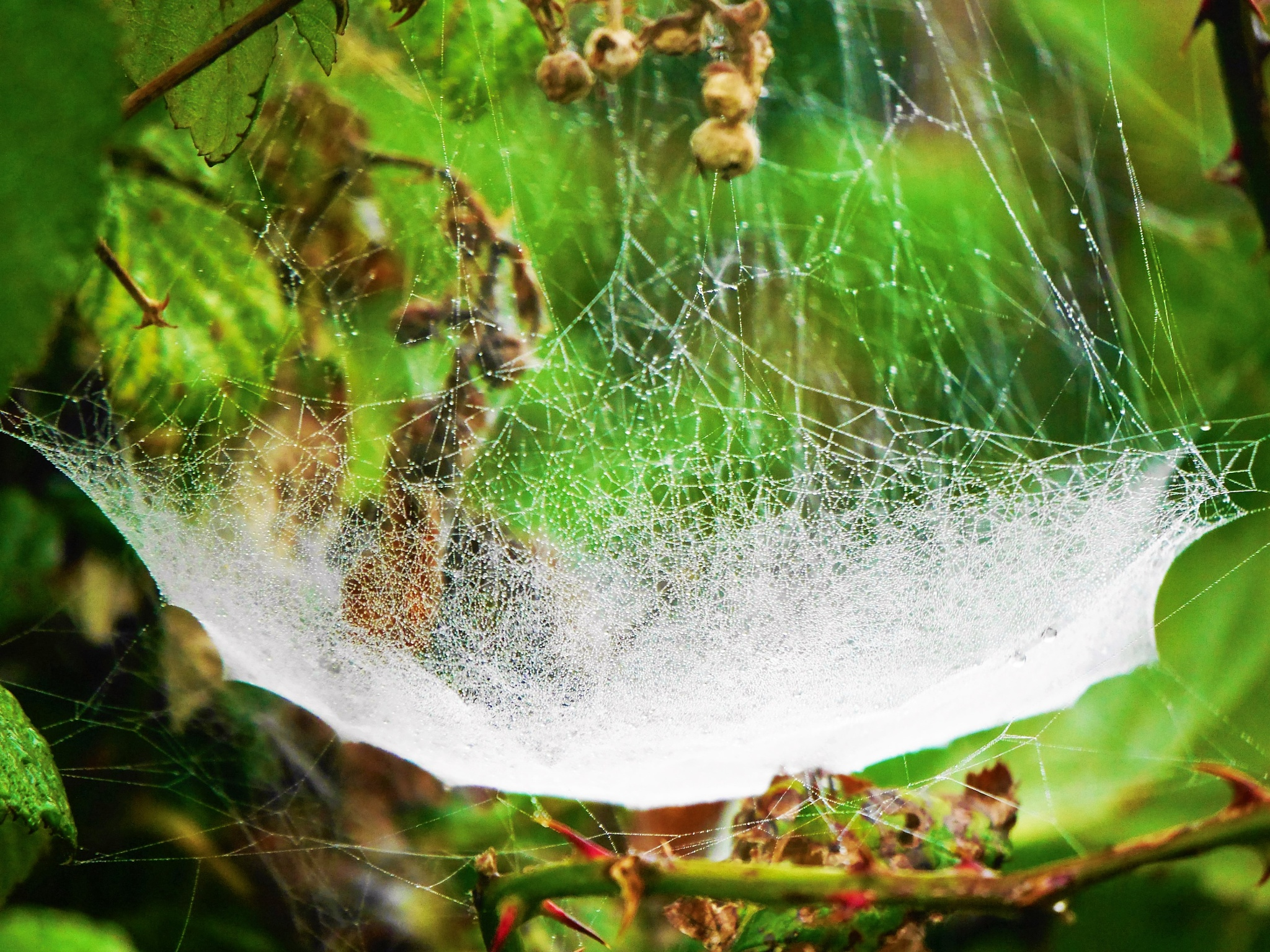 Spider Hammock. by aterrykelly01