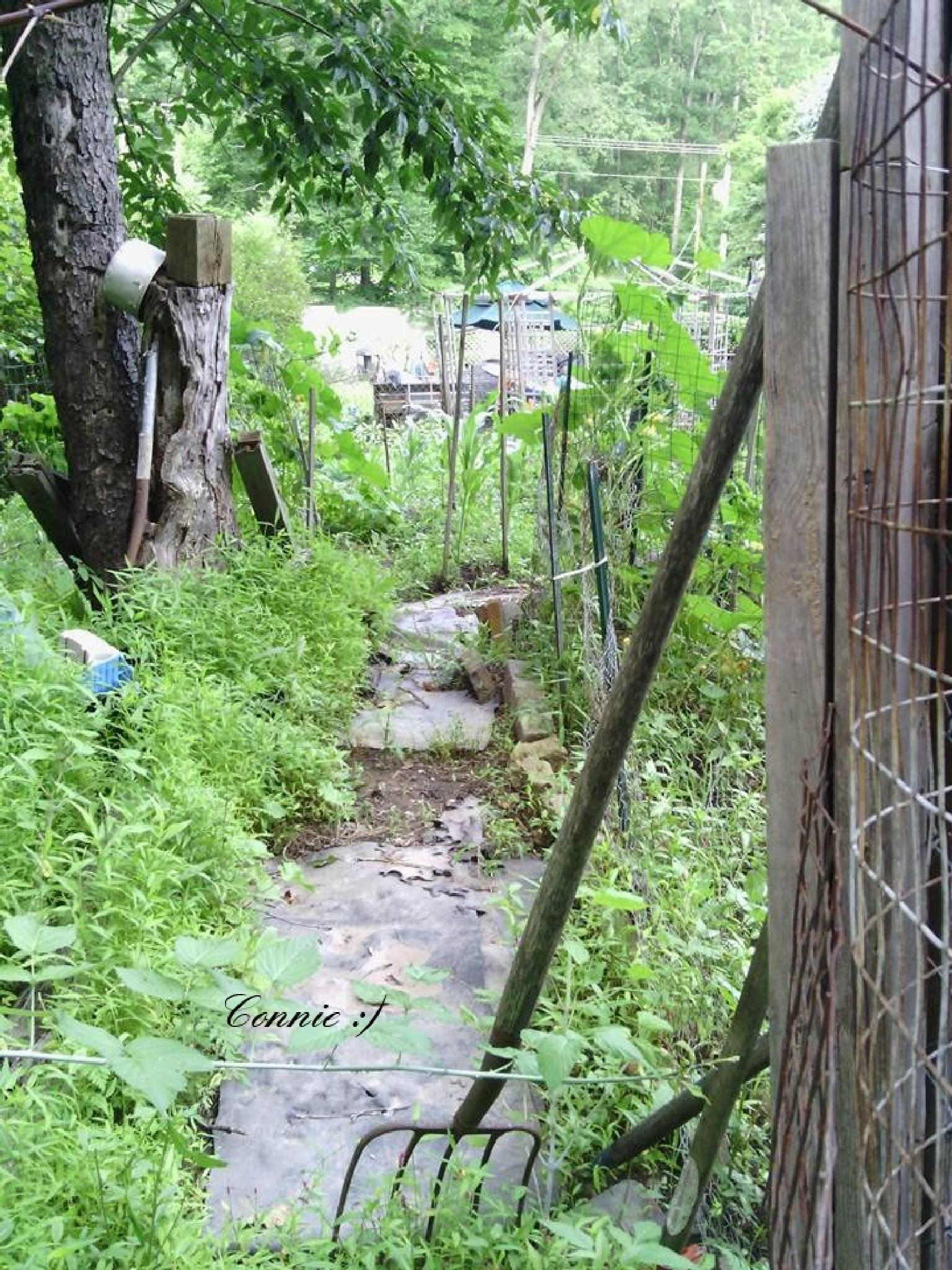 garden path by comehometoyourroots