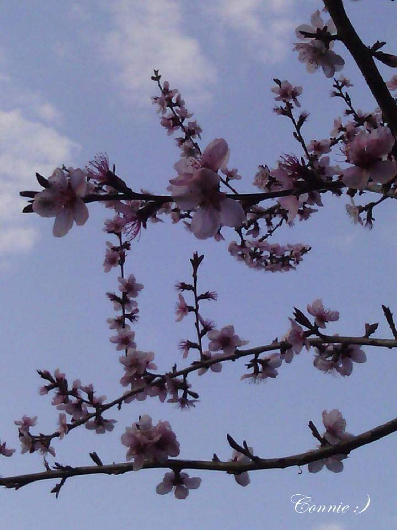 Photo in Nature #springtime #blossom #purple