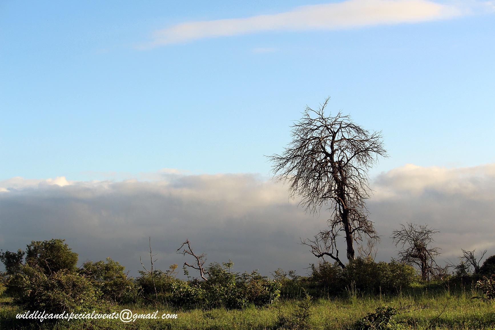 Last tree standing by oosie