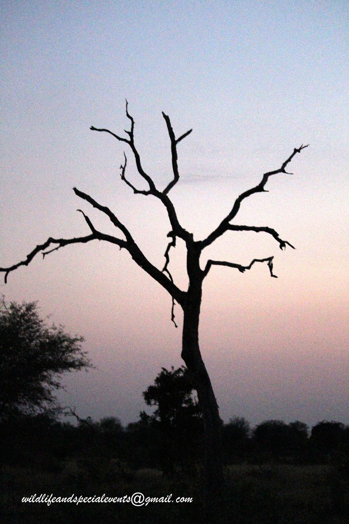 my Tree by oosie