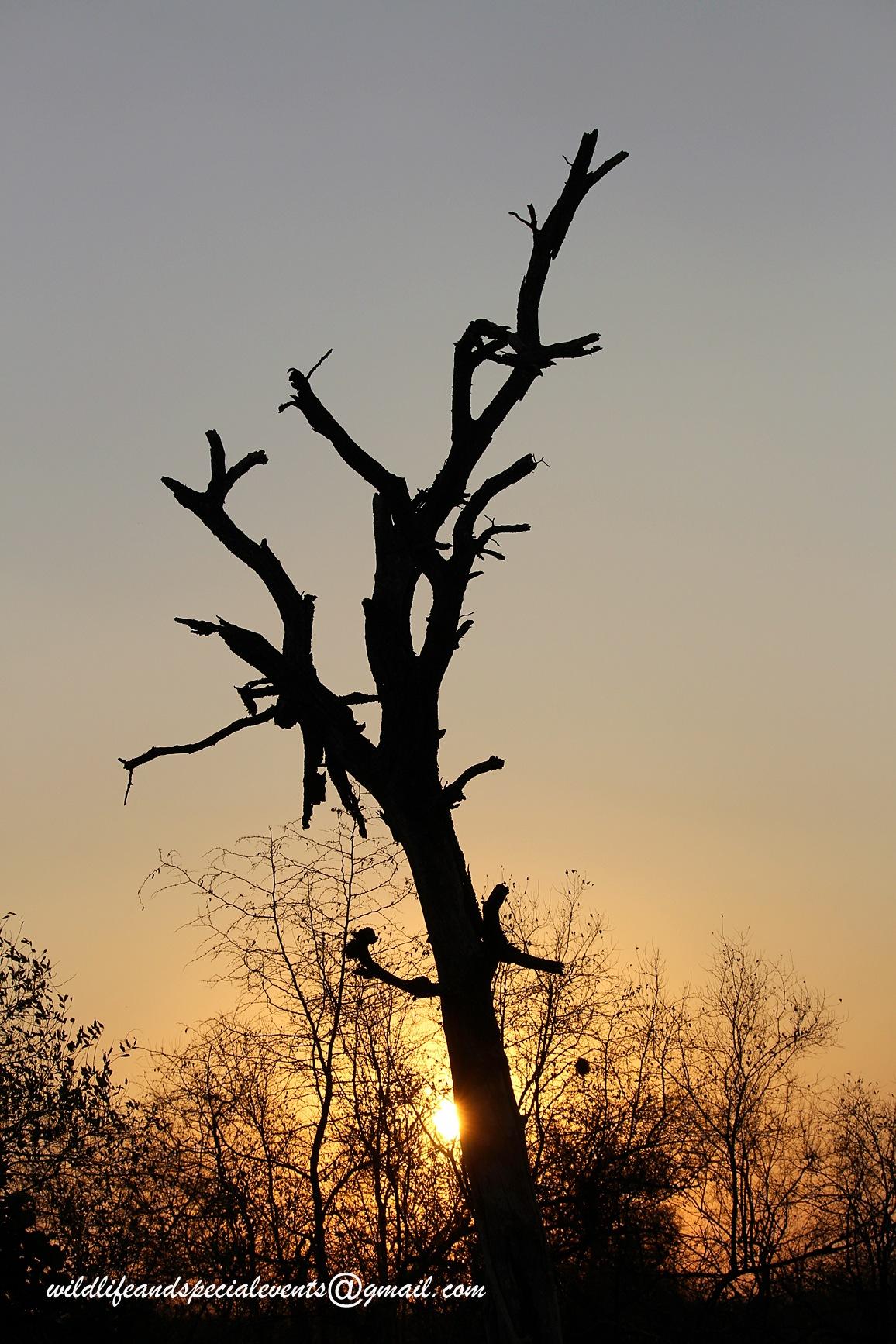 African sunrise in Kruger by oosie
