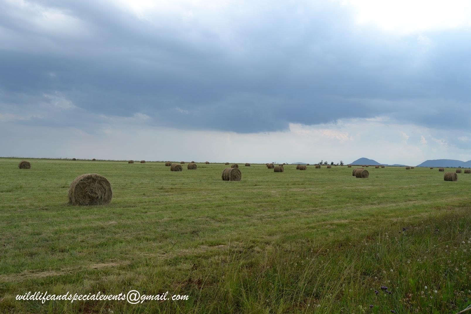 Farmlife by oosie