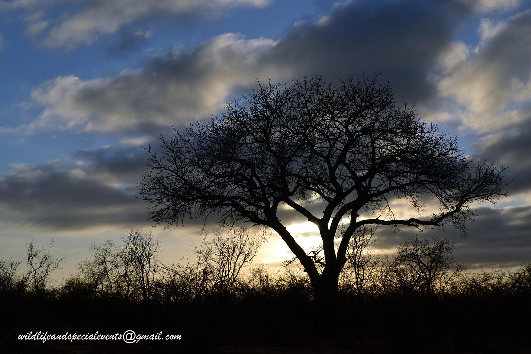 African sunrise by oosie