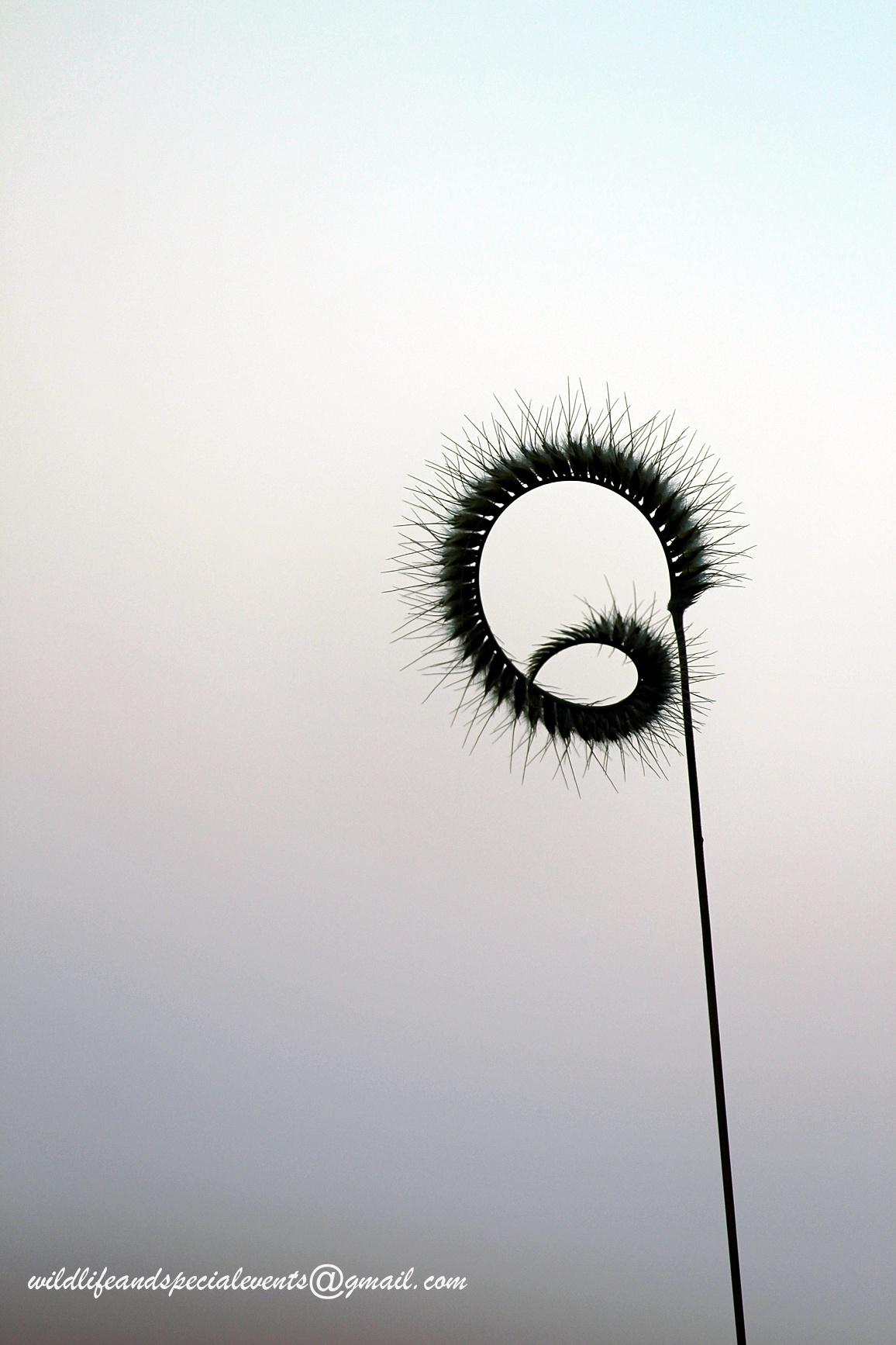 Spiky Grass by oosie