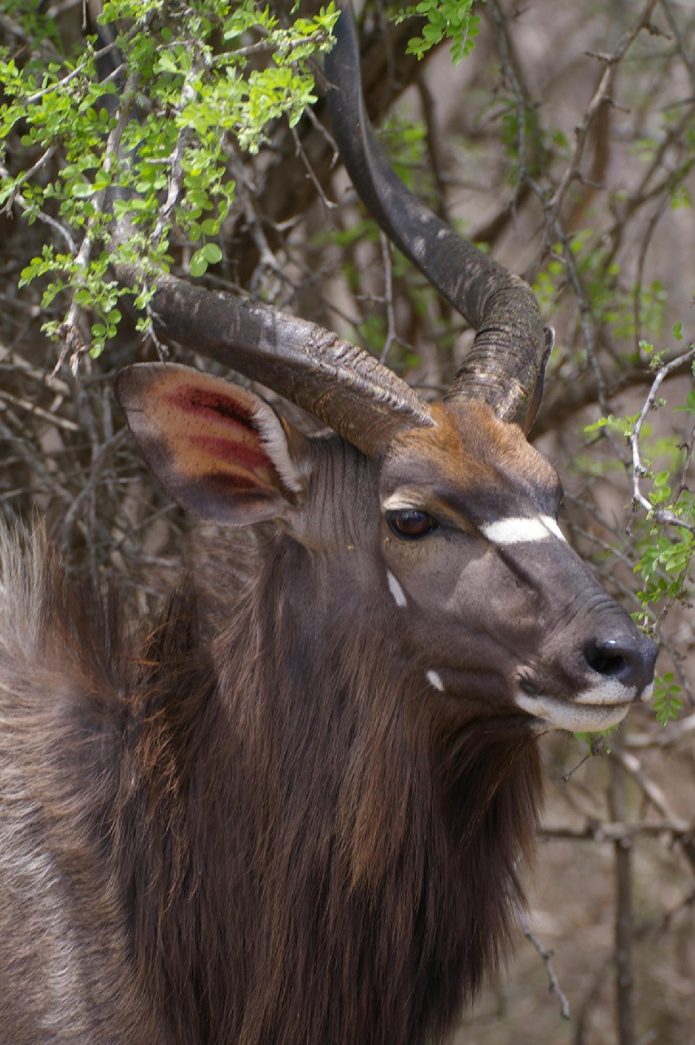 Horns by oosie