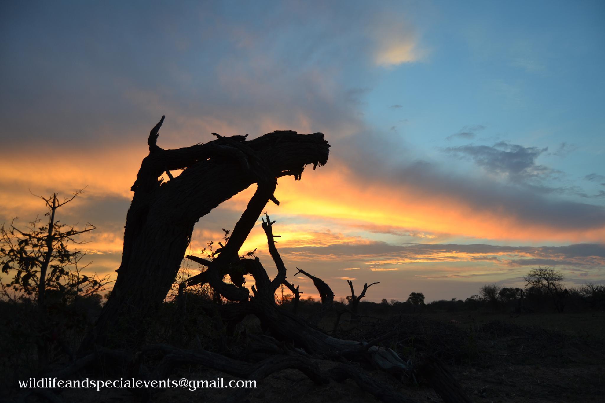 tree stump by oosie