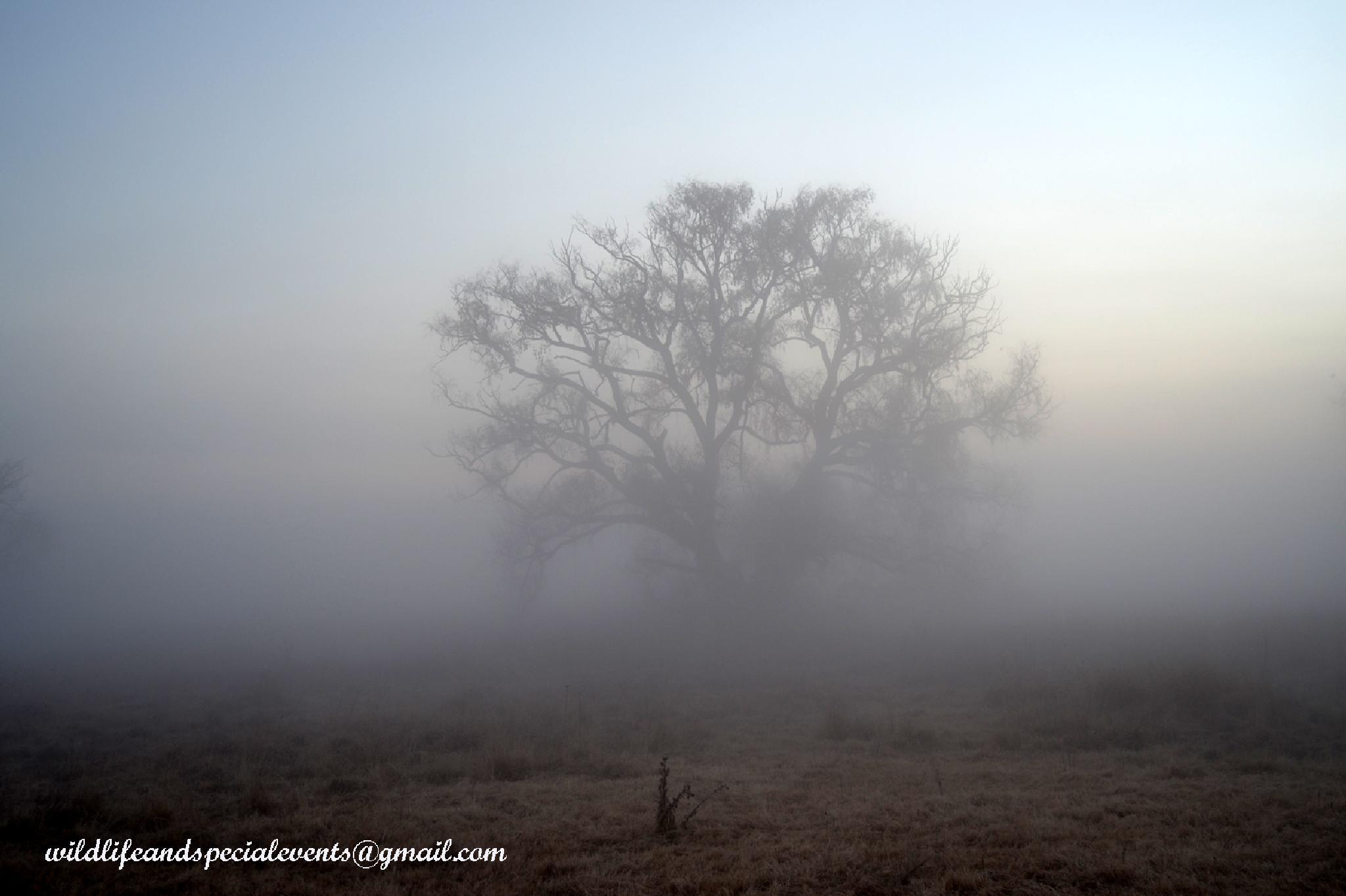 Tree in the mist by oosie