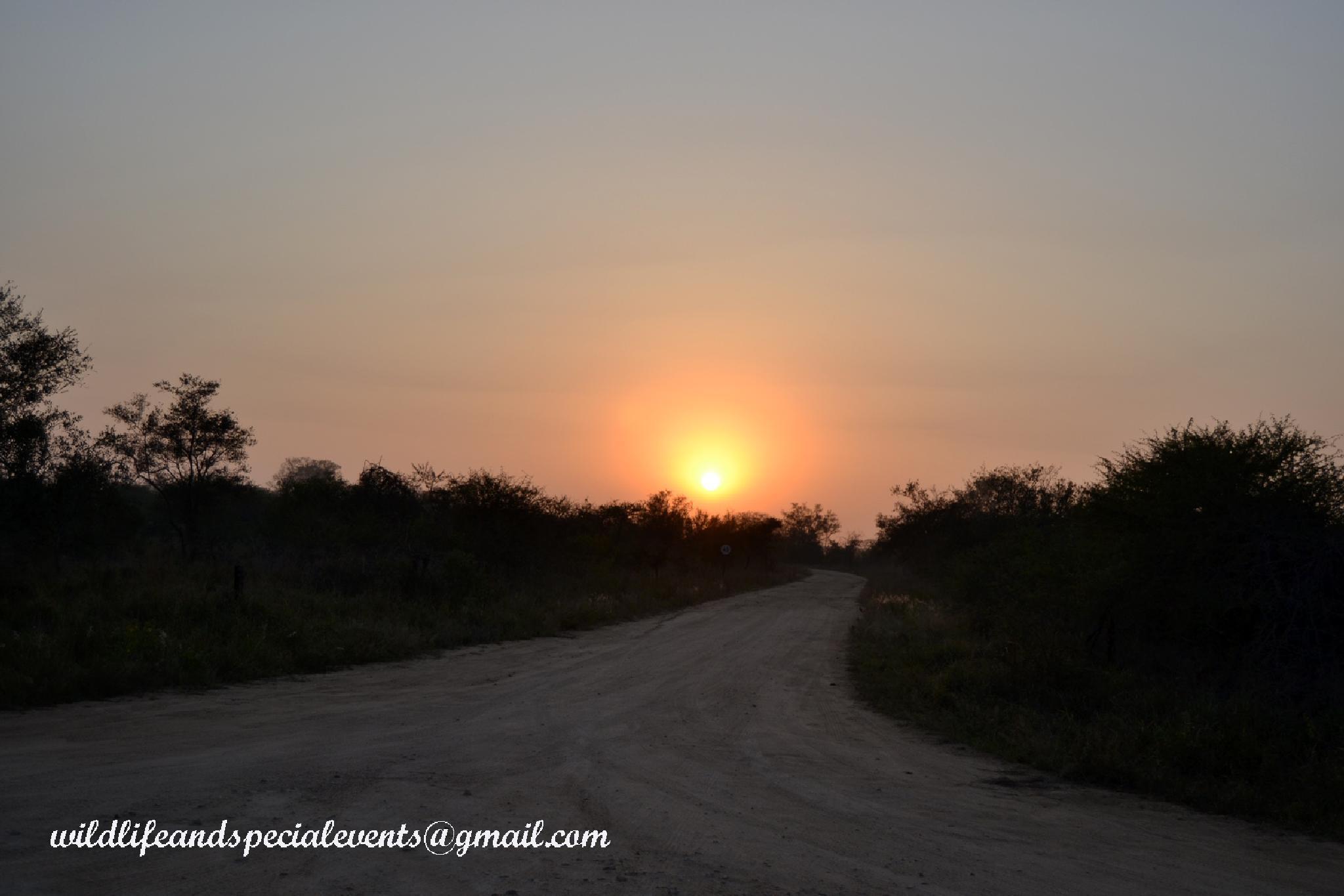 Kruger Sunrise by oosie