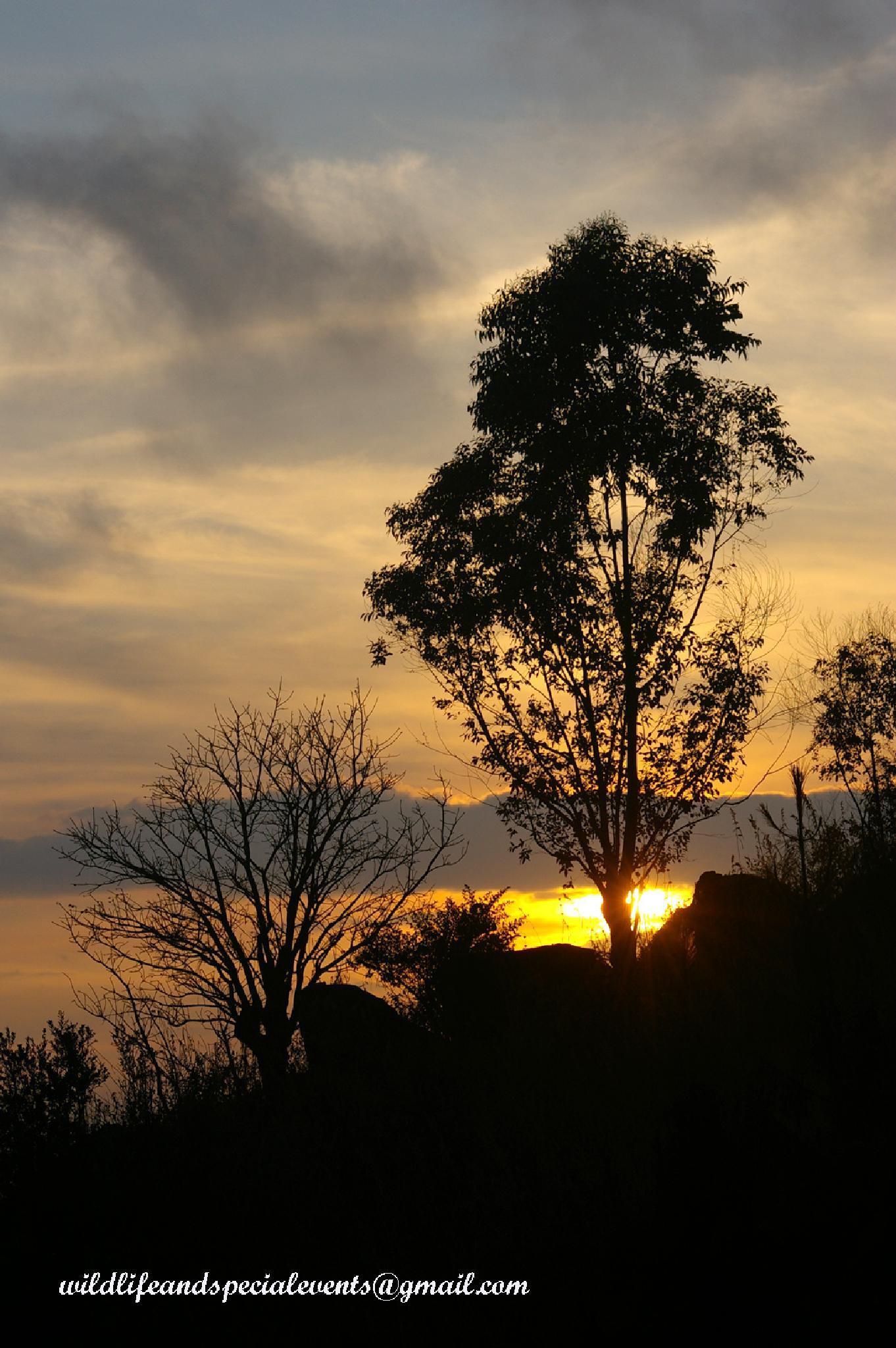 Plantation Sunrise by oosie