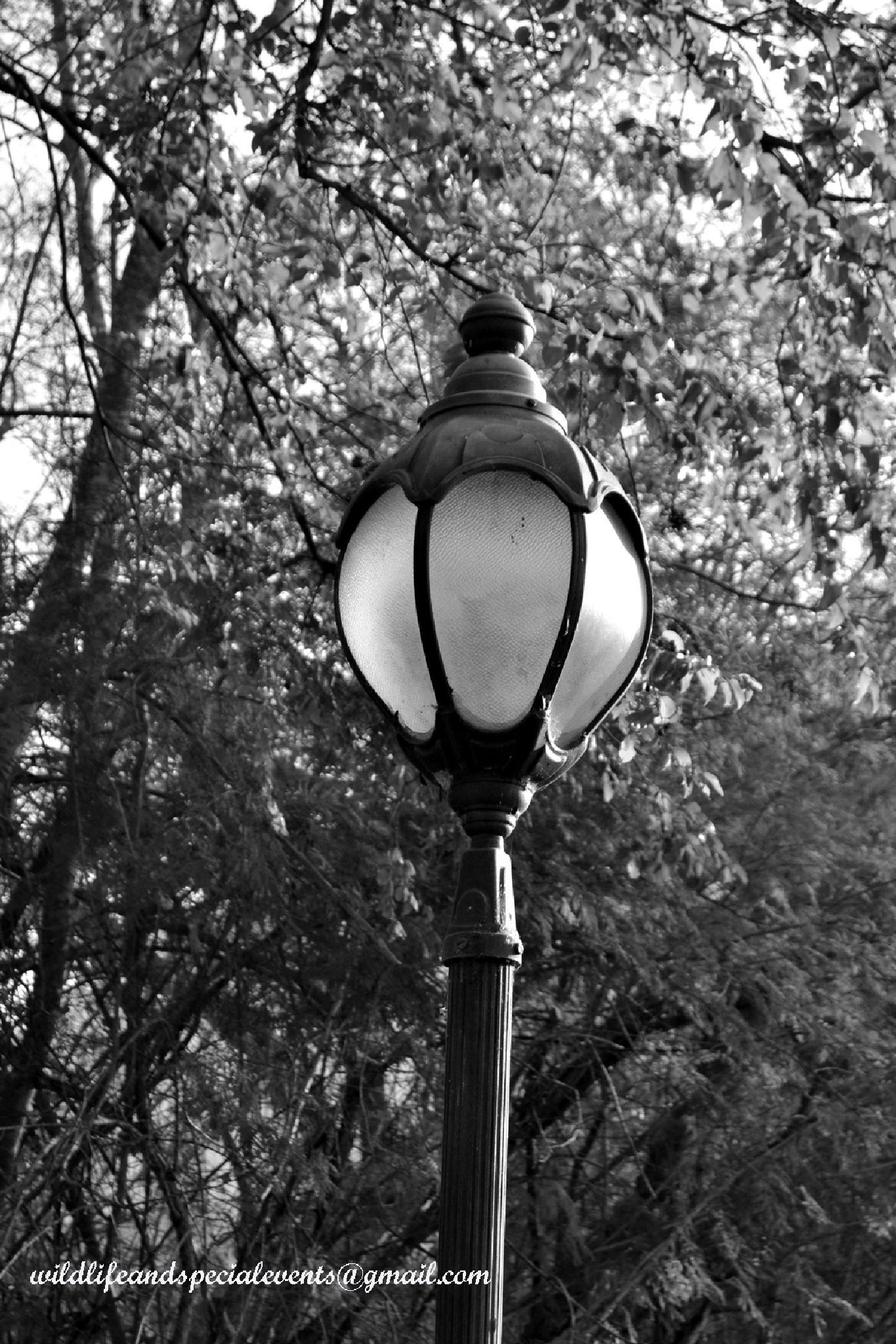Lite Pole by oosie