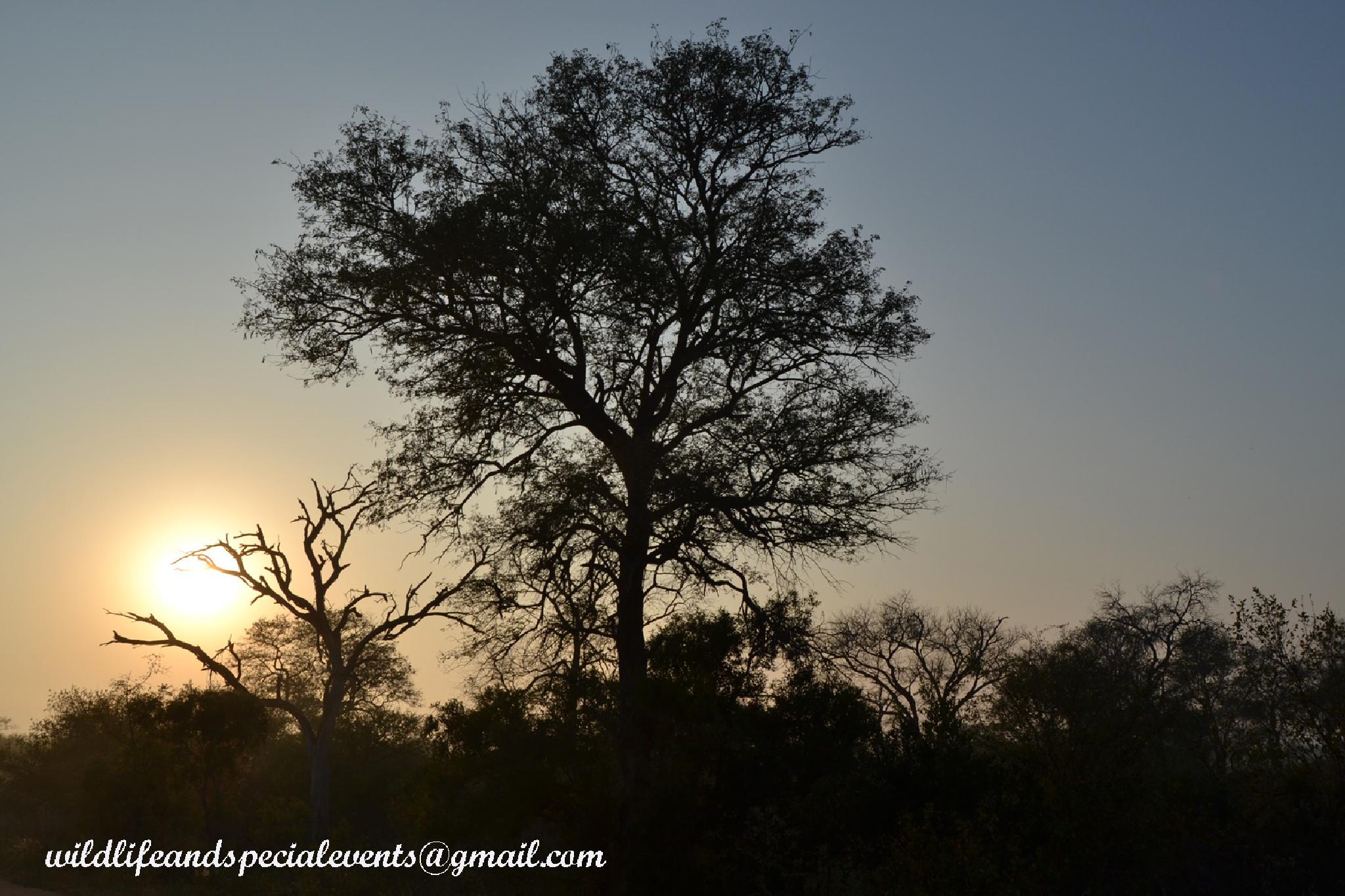 Africa's best Sunrise by oosie