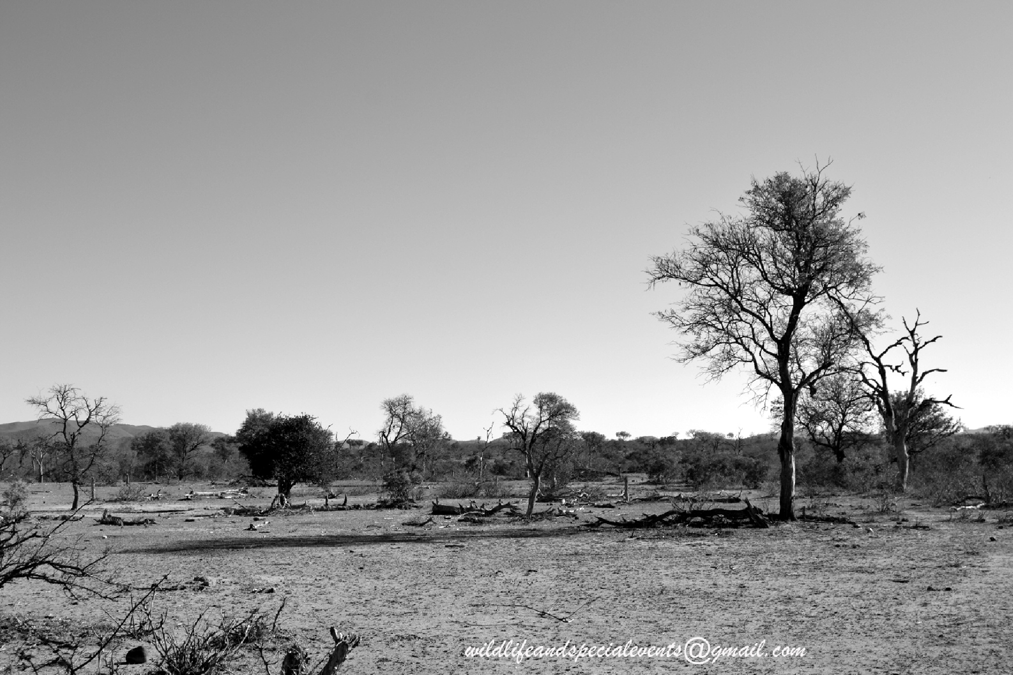 Africa's Drought in Black and White by oosie