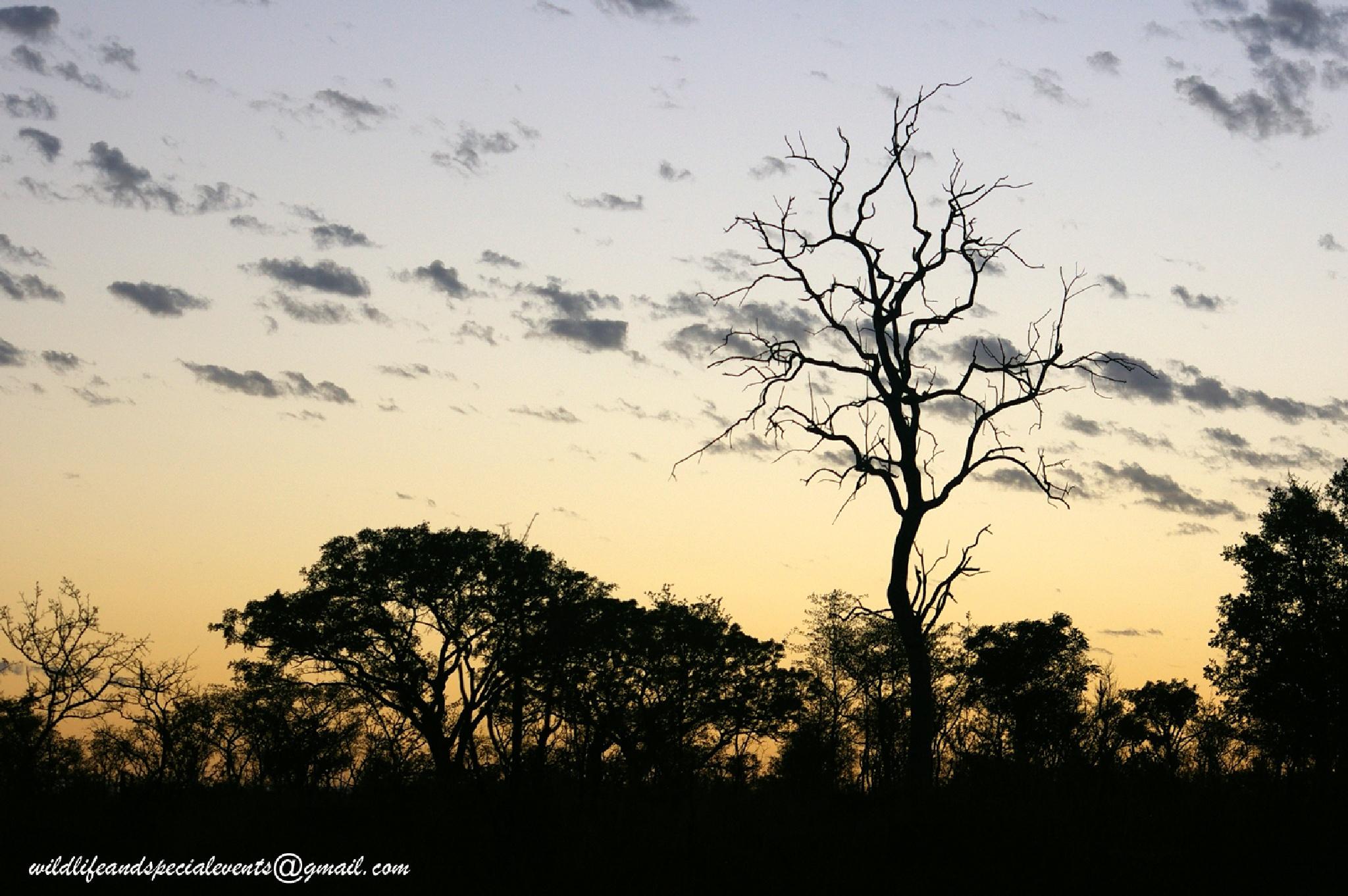 A Bushveld Sunrise in Africa by oosie