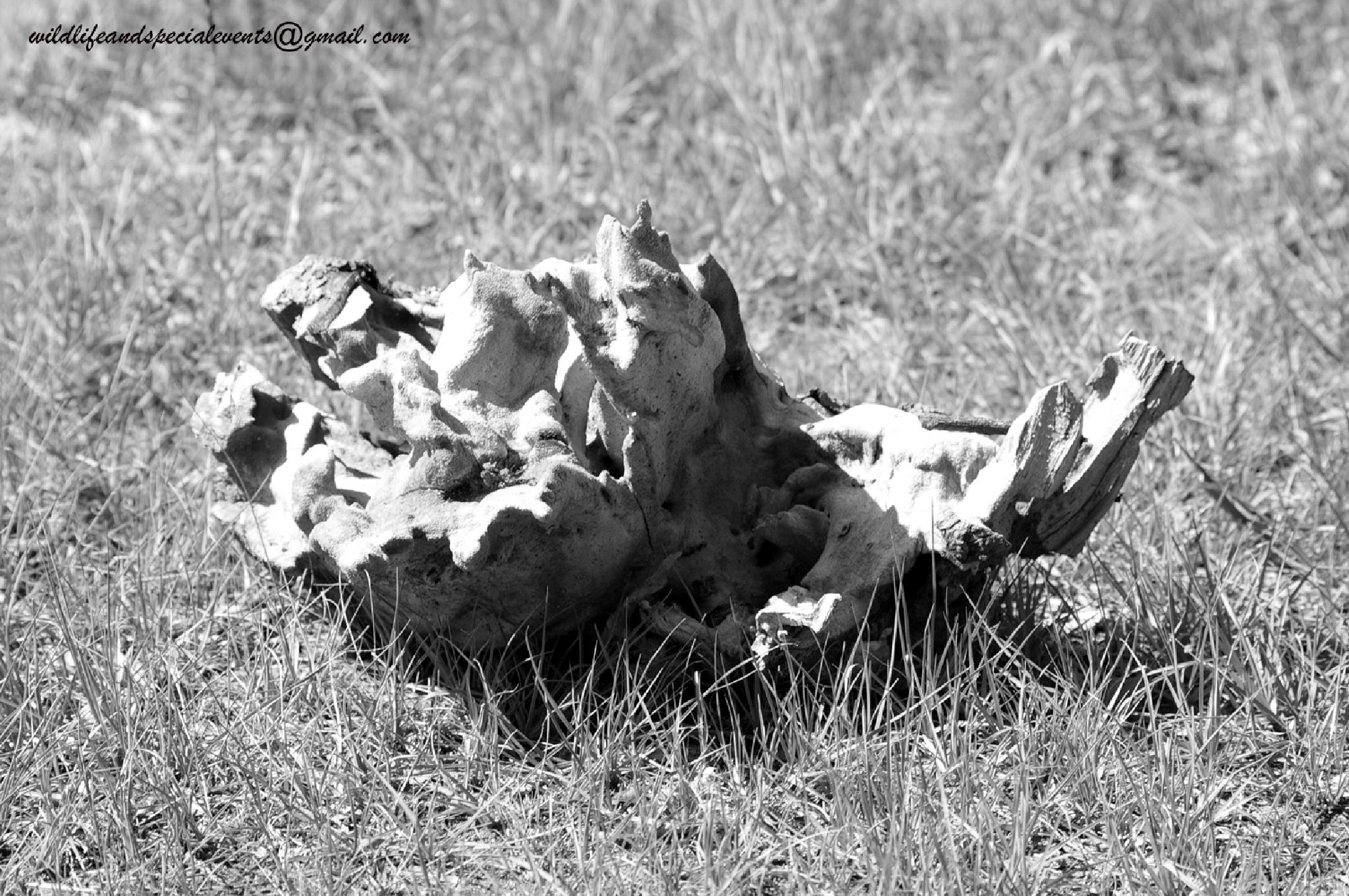 Termite's wood Kastle by oosie