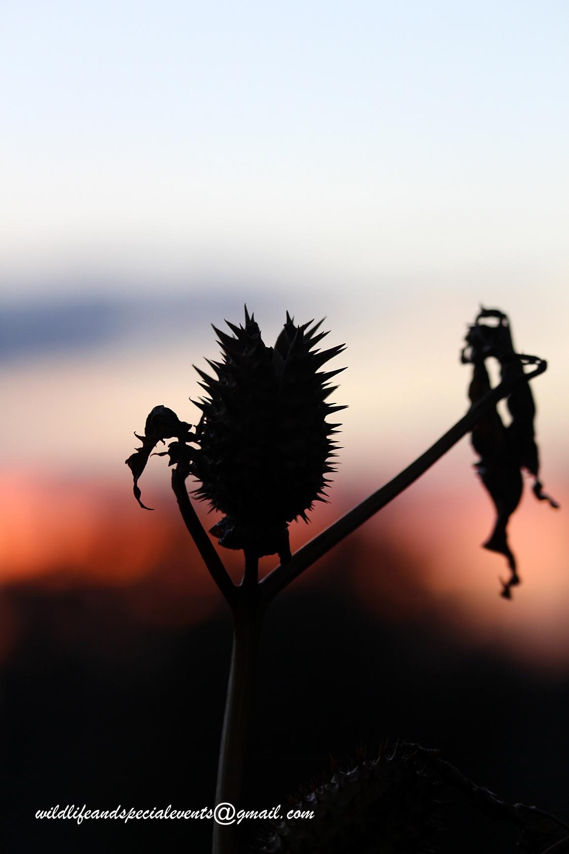 Seeds at Sunrise by oosie