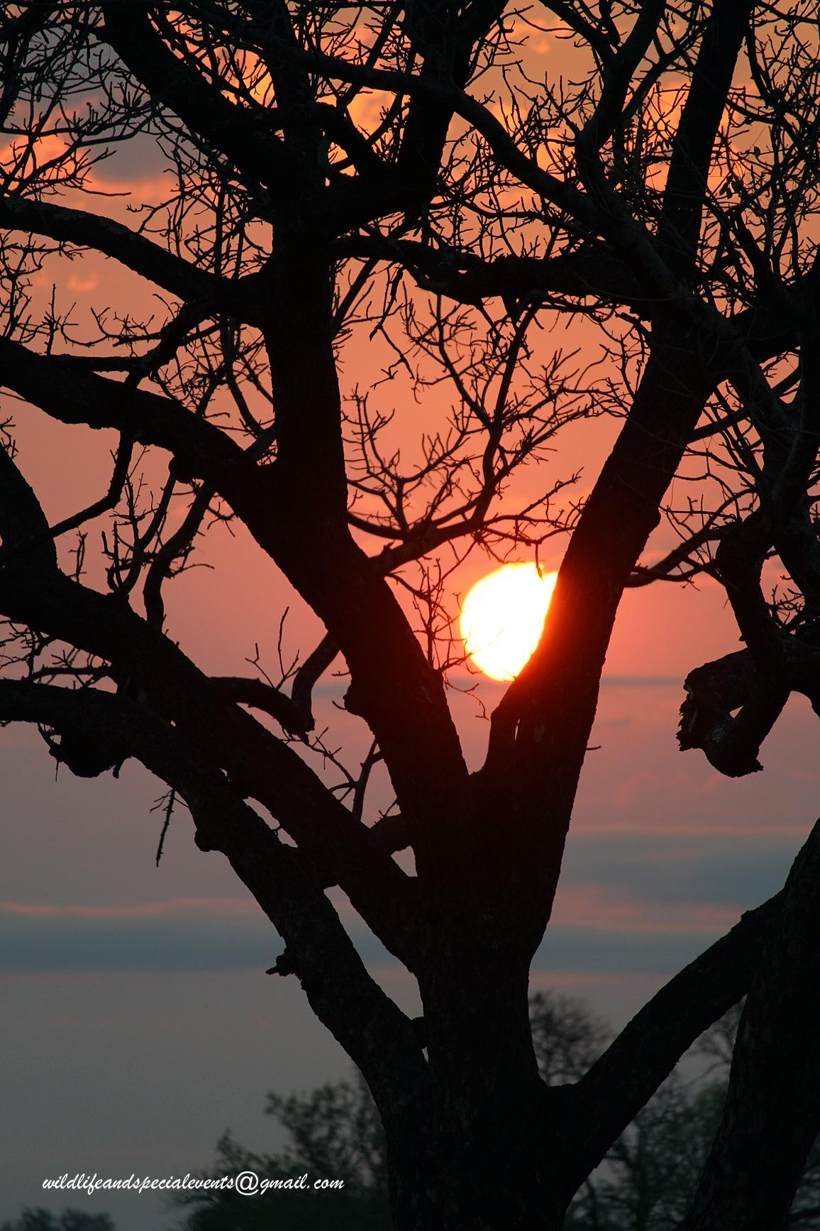 The sunrise tree by oosie