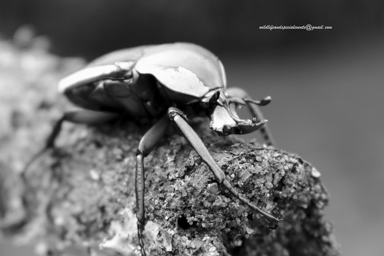 Alien  by oosie