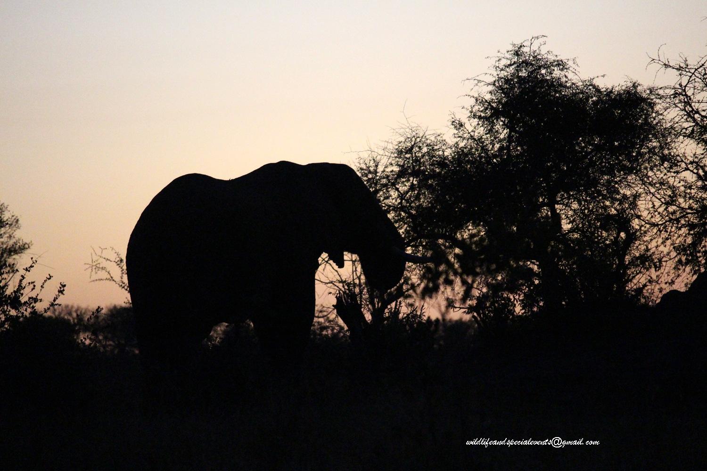 Big5 at sunrise by oosie