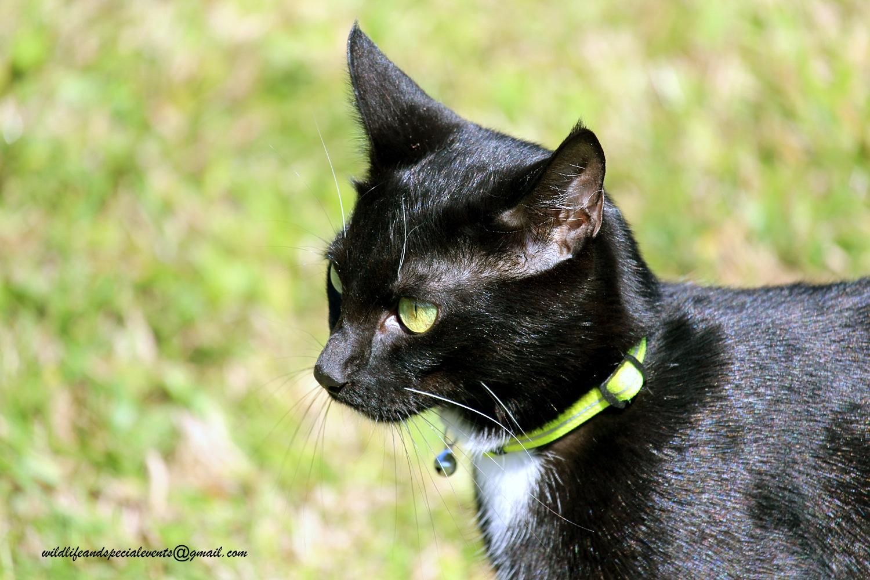 The Black Cat by oosie