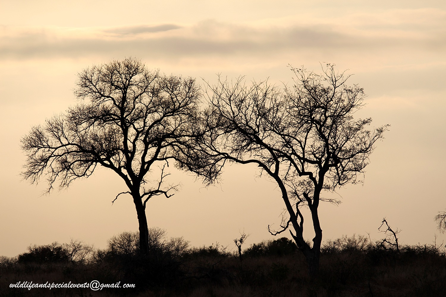 My new day in Africa by oosie