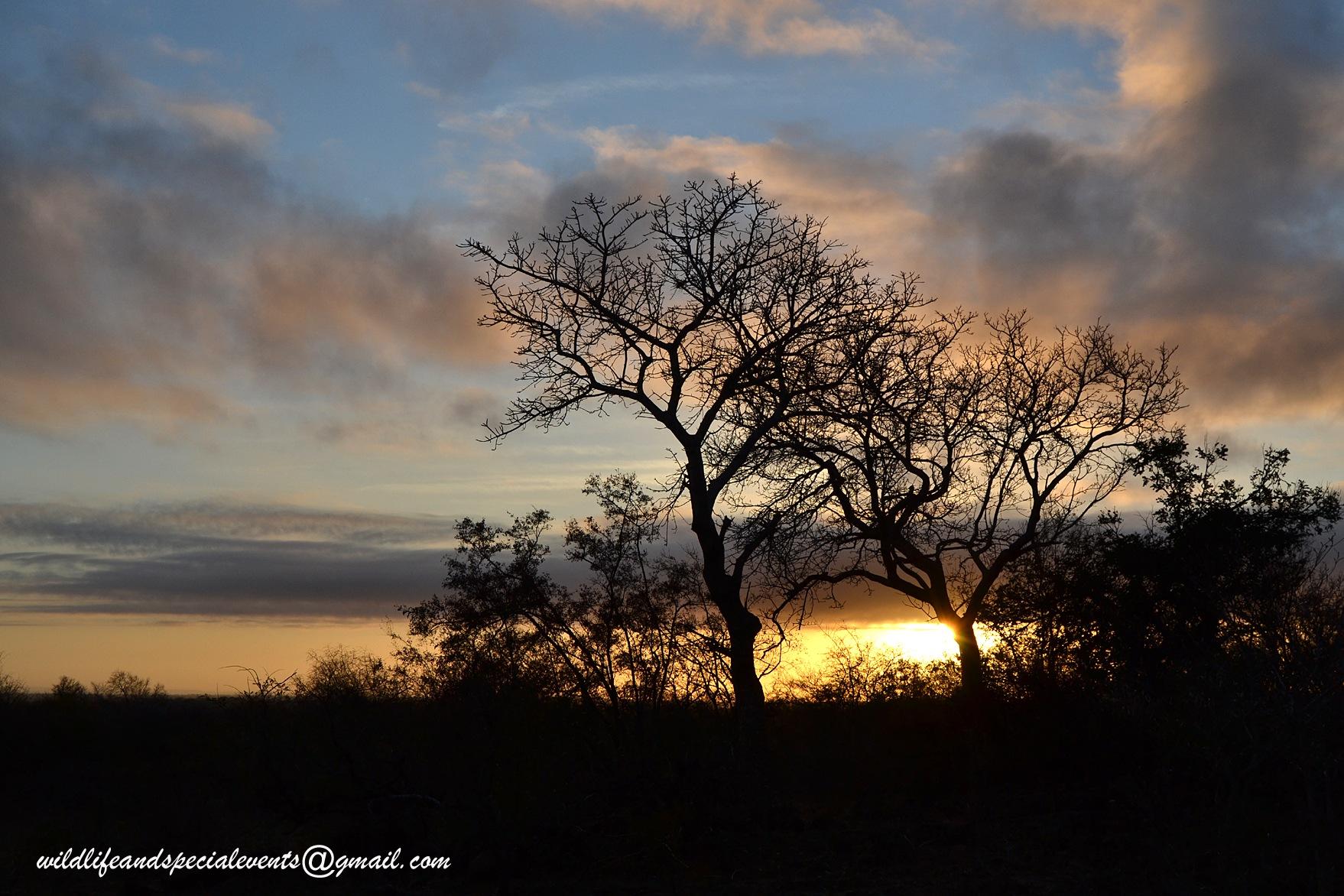 Sunrise in Kruger Park by oosie