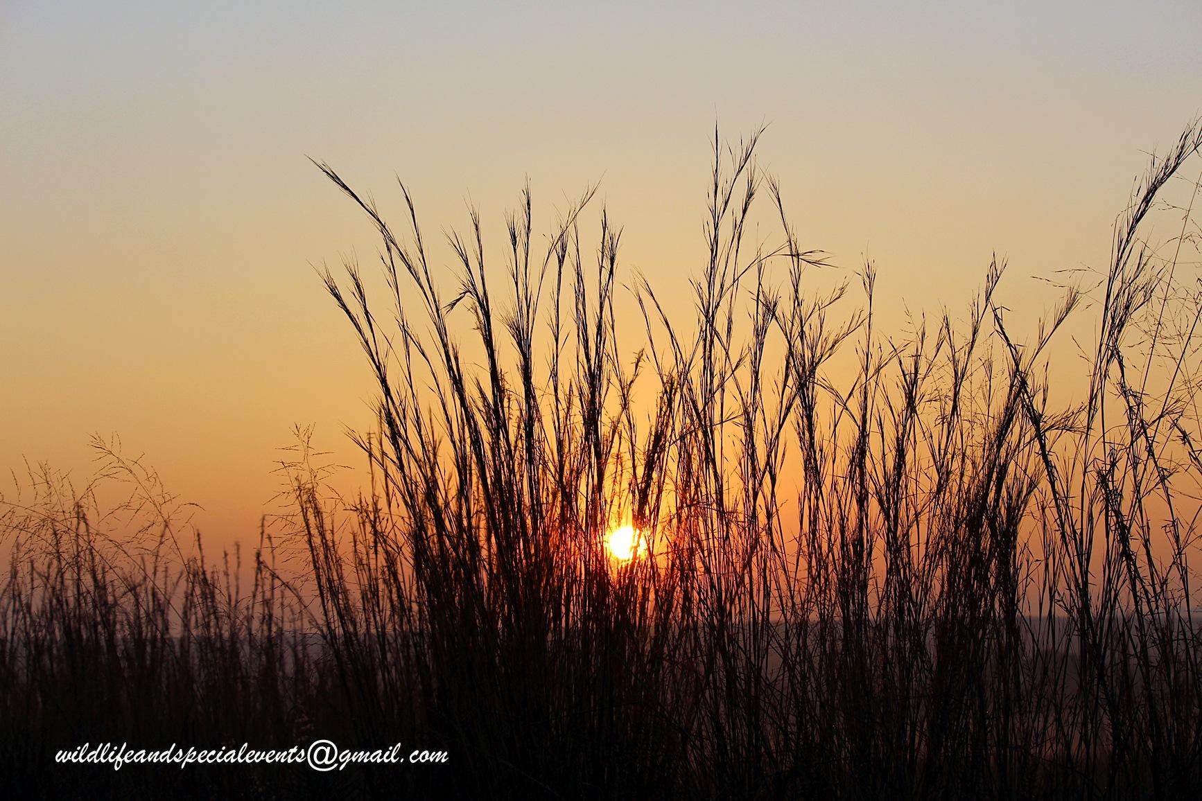Sunrise in Africa by oosie
