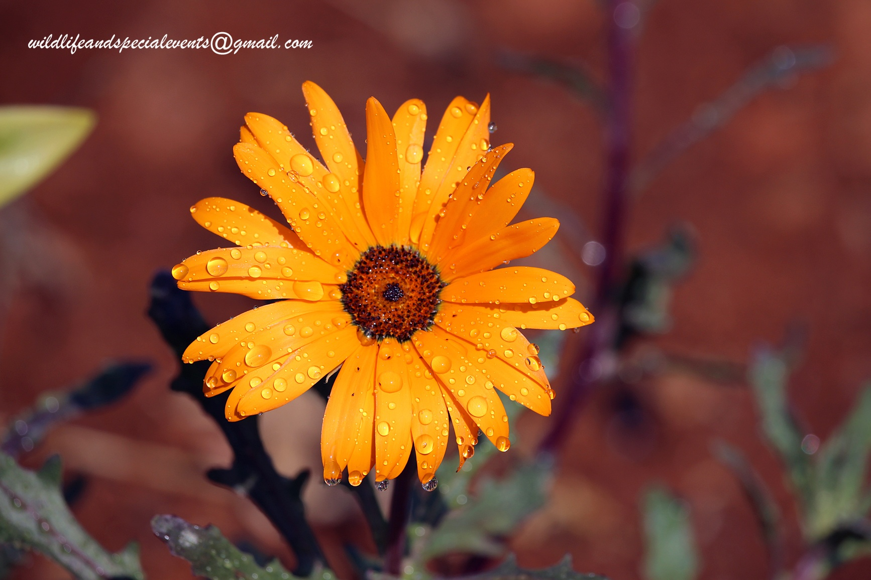 Flower with rain drops by oosie