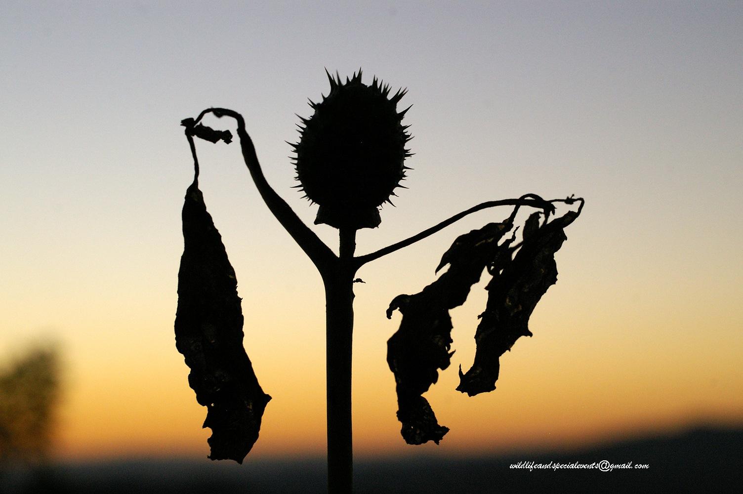 Dancing at dawn by oosie