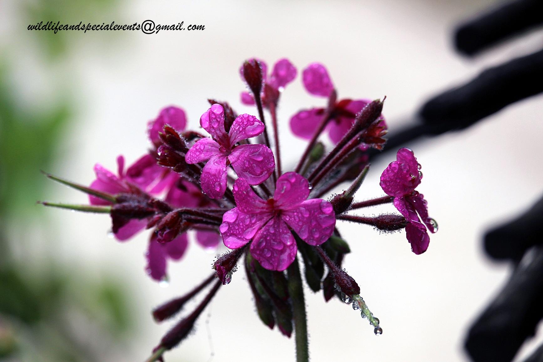 Flowers in the rain by oosie