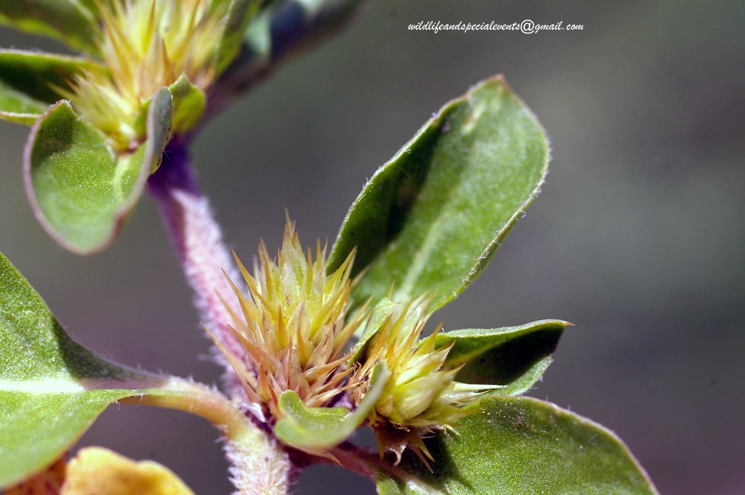 Wild flower by oosie