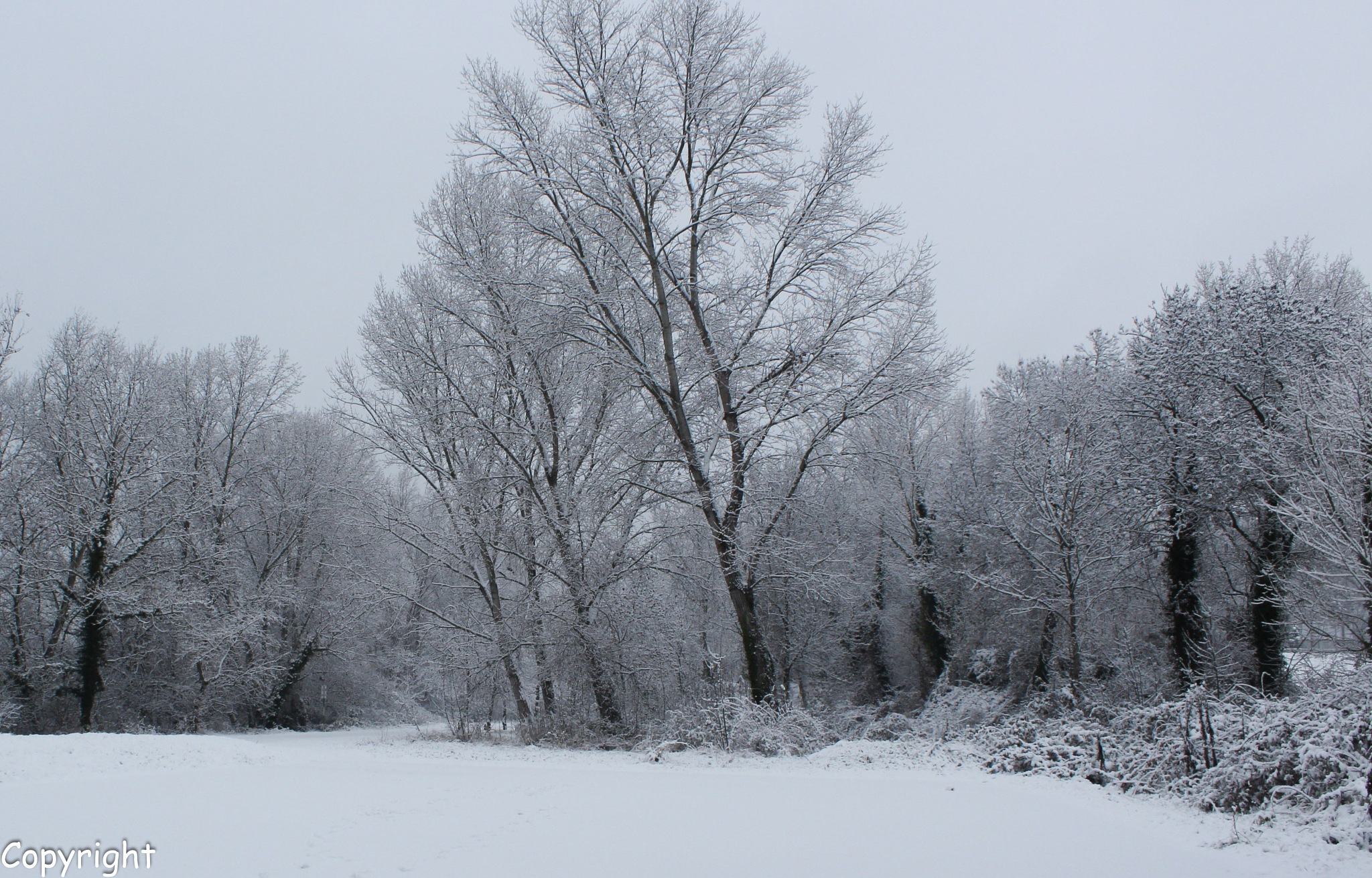 L'hiver est là ! Winter is coming ! by Claudine MACHONPEREIRA