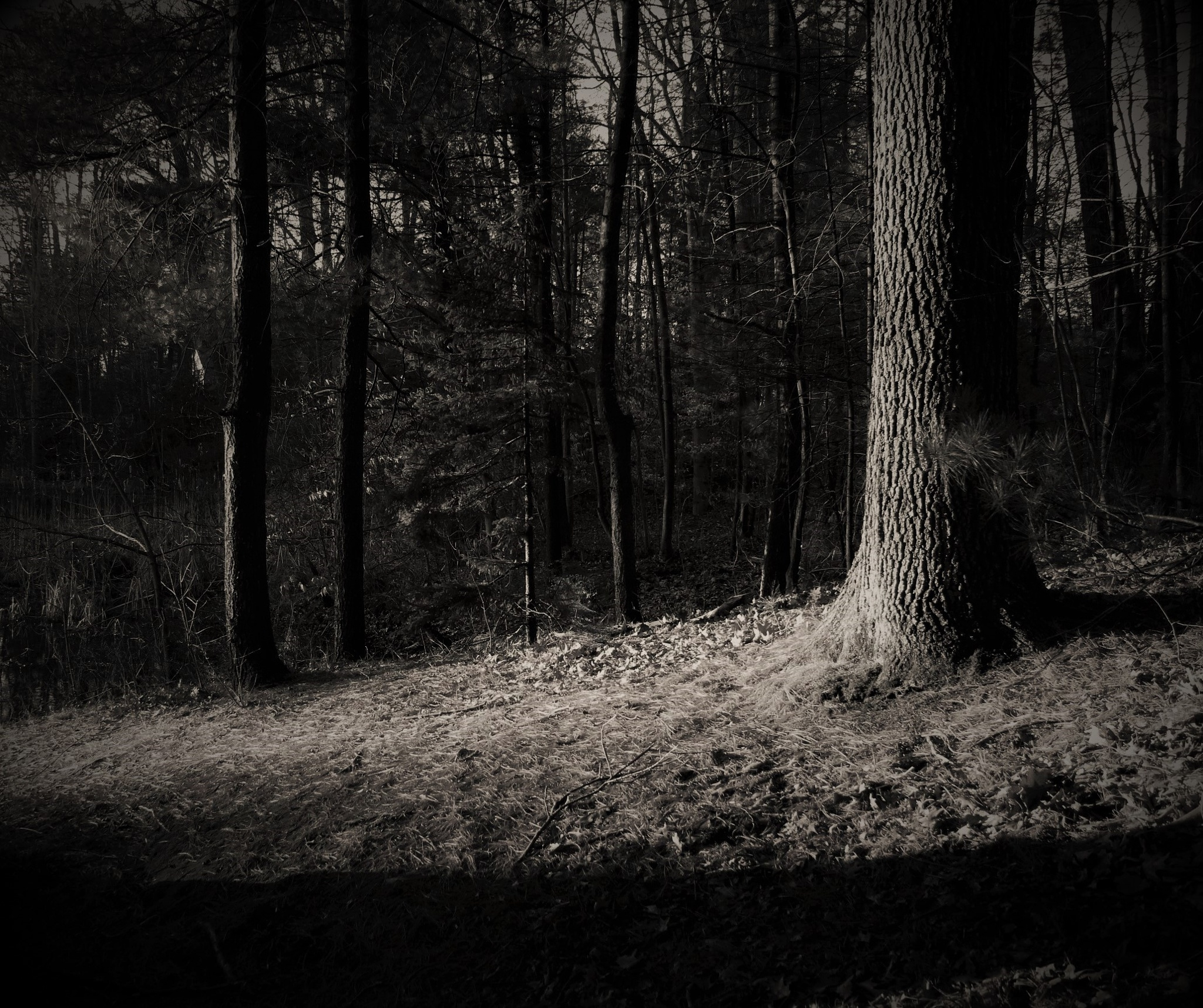 One Tree Among Trees by debbie.lamontesnyder