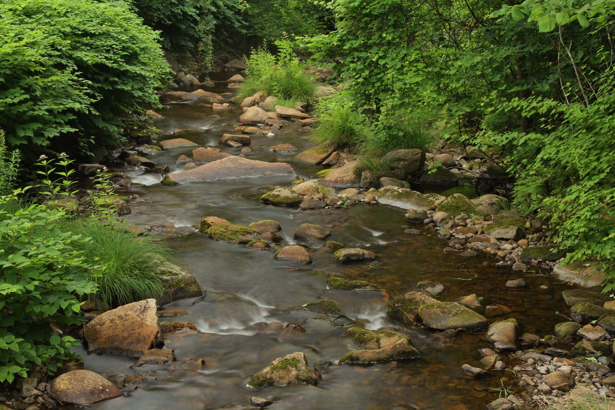 Gentle Flowing Stream by debbie.lamontesnyder