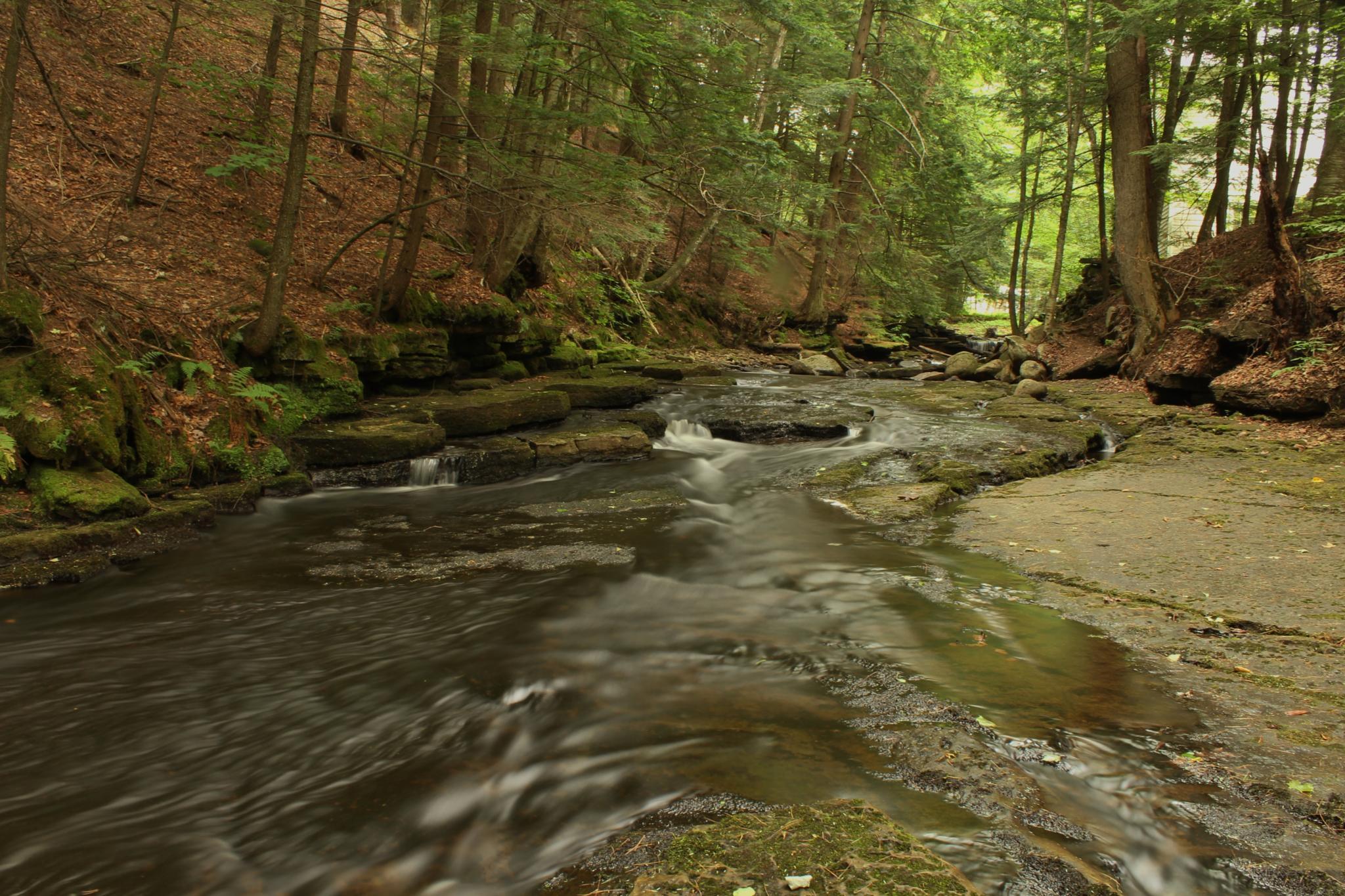 Photo in Random #stream #water #river