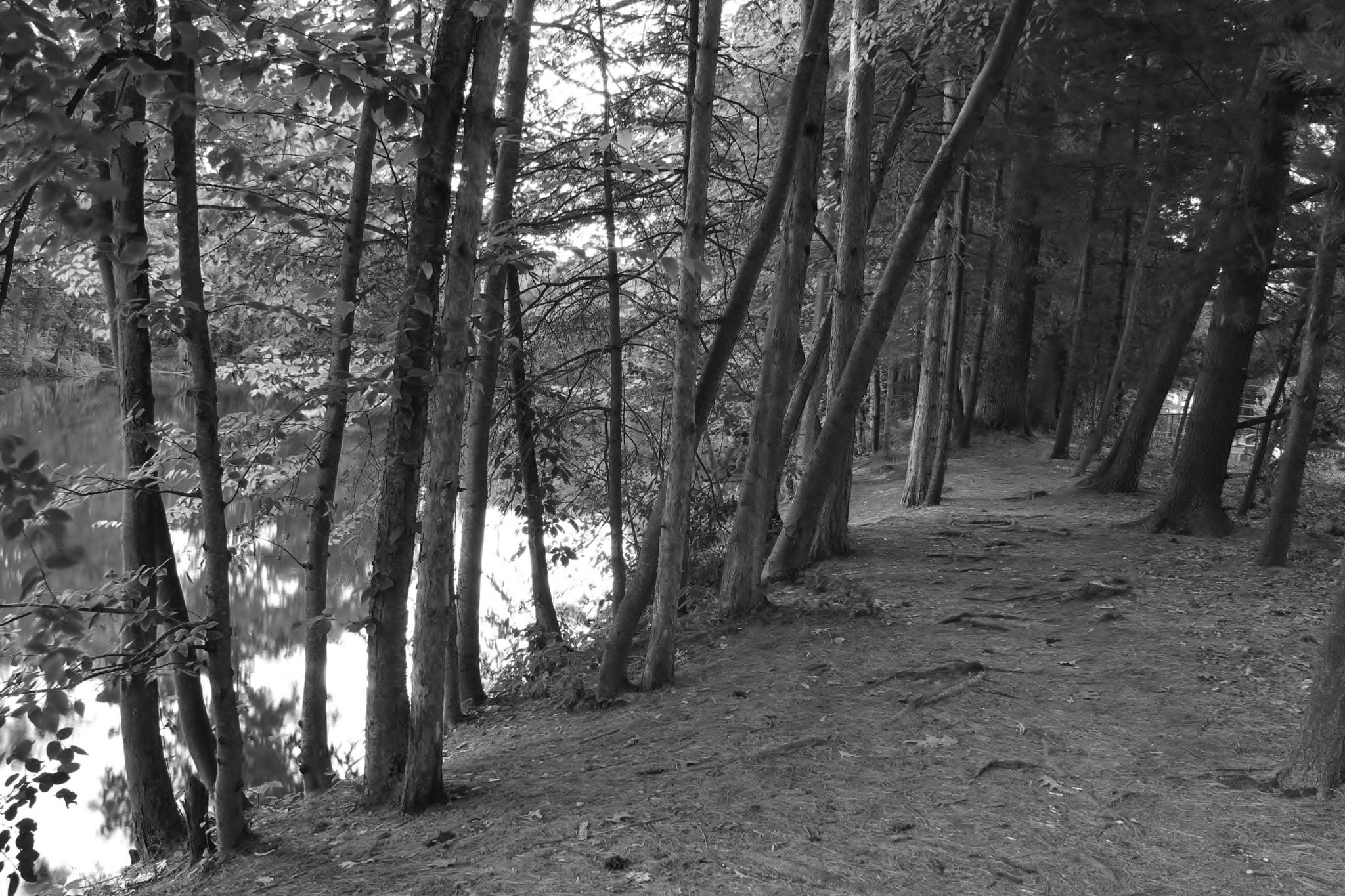 Trail of Trees by debbie.lamontesnyder