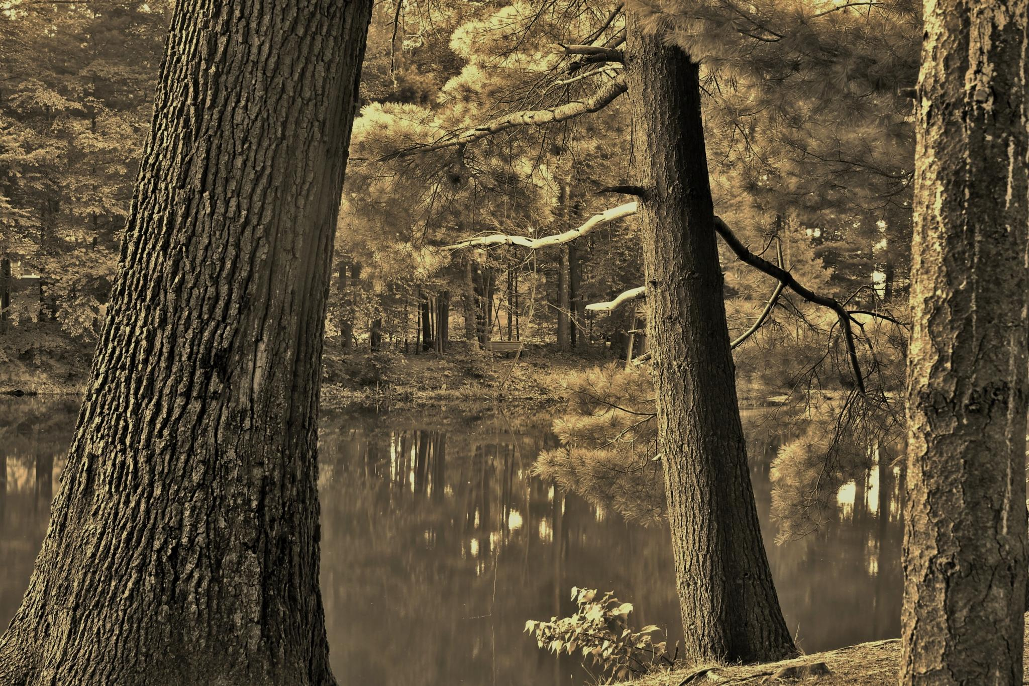 Three Trees by debbie.lamontesnyder