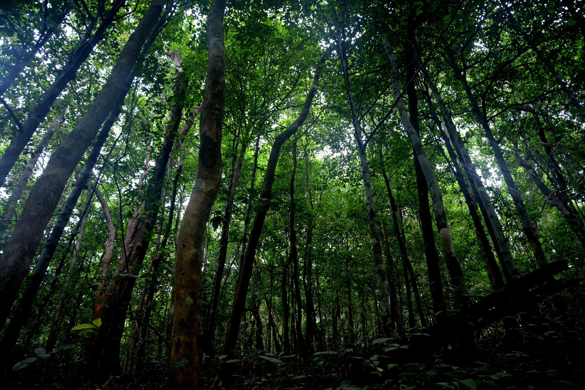 Forrest  by Nagendra Bhat