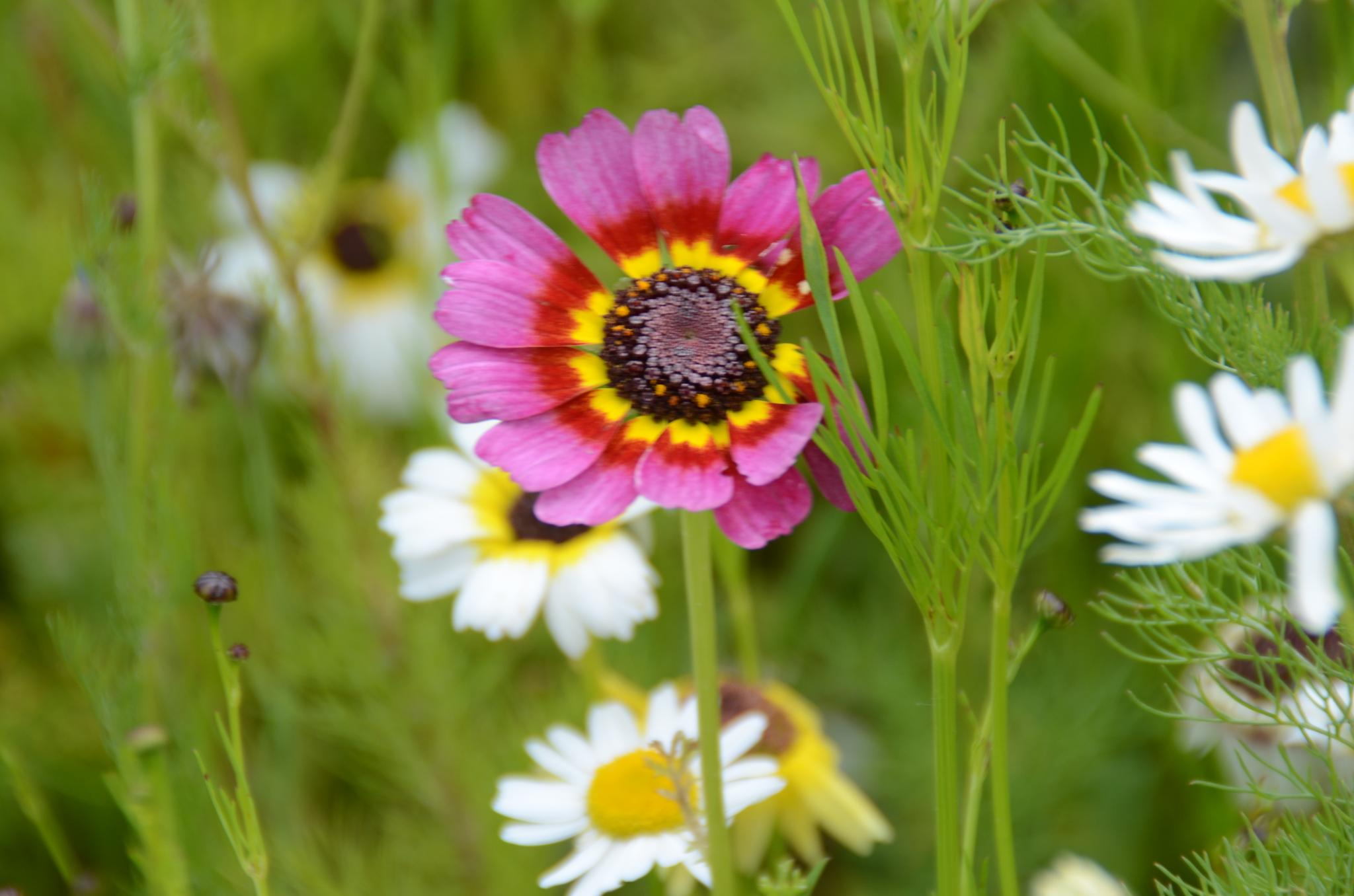 Meadow flowers by jackiwright16