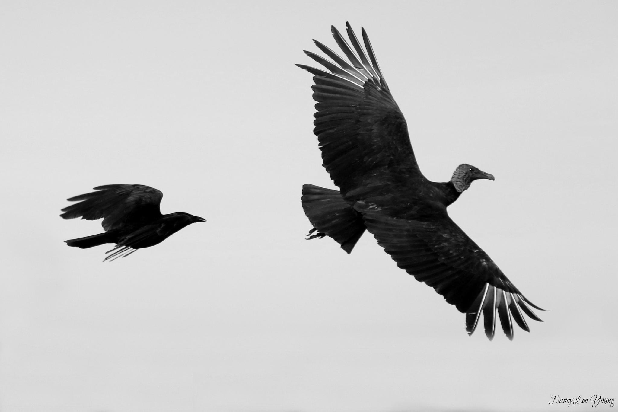 Photo in Animal #birds #nature #wildlife